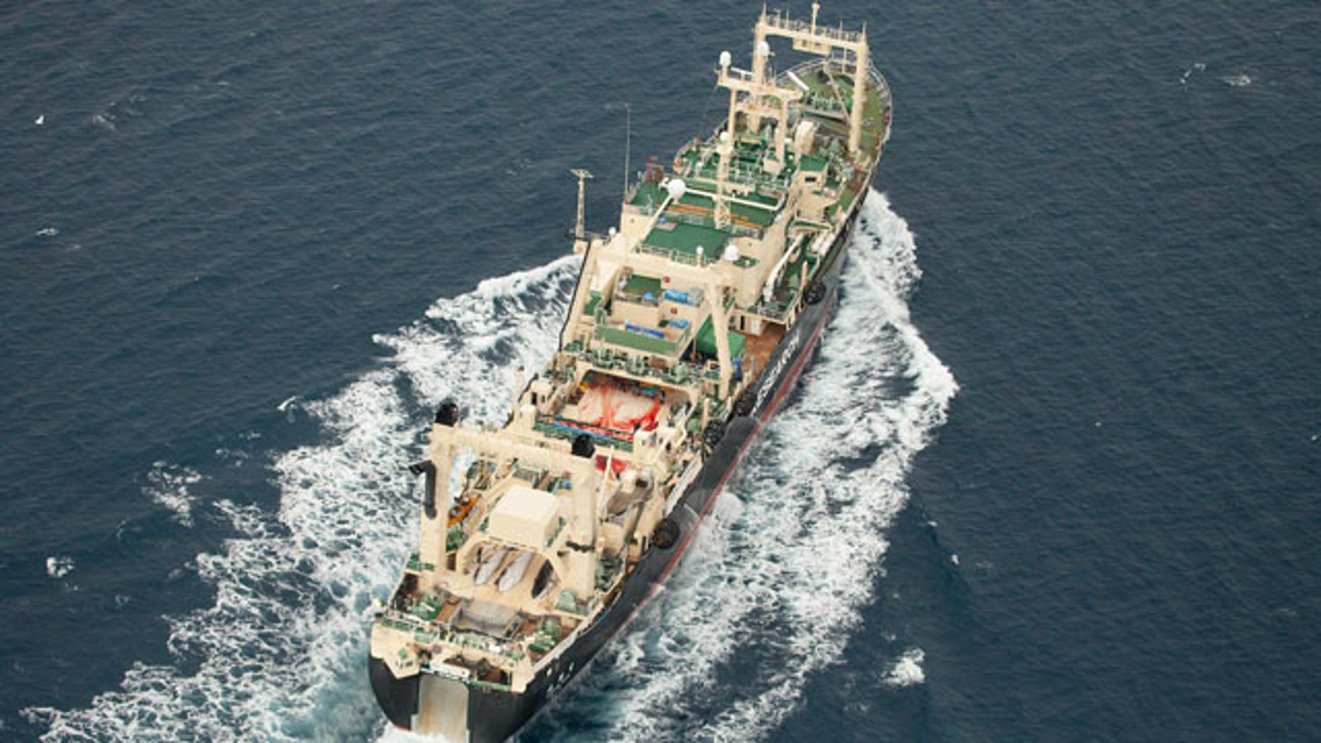 January 5, 2014:In this photo supplied by Sea Shepherd Australia, three dead minke whales lie on the deck of the Japanese whaling vessel Nisshin Maru as it travels through the Southern Ocean. Anti-whaling group Sea Shepherd said it caught up with all five of Japan's whaling vessels on Monday and found evidence of whale kills on one. Japan is allowed to hunt the animals for scientific purposes under an exception to a 1986 ban on whaling. But opponents argue the scientific program is a cover for commercial whaling because whale meat not used for study is sold as food in Japan. (AP Photo/Tim Watters, Sea Shepherd Australia)