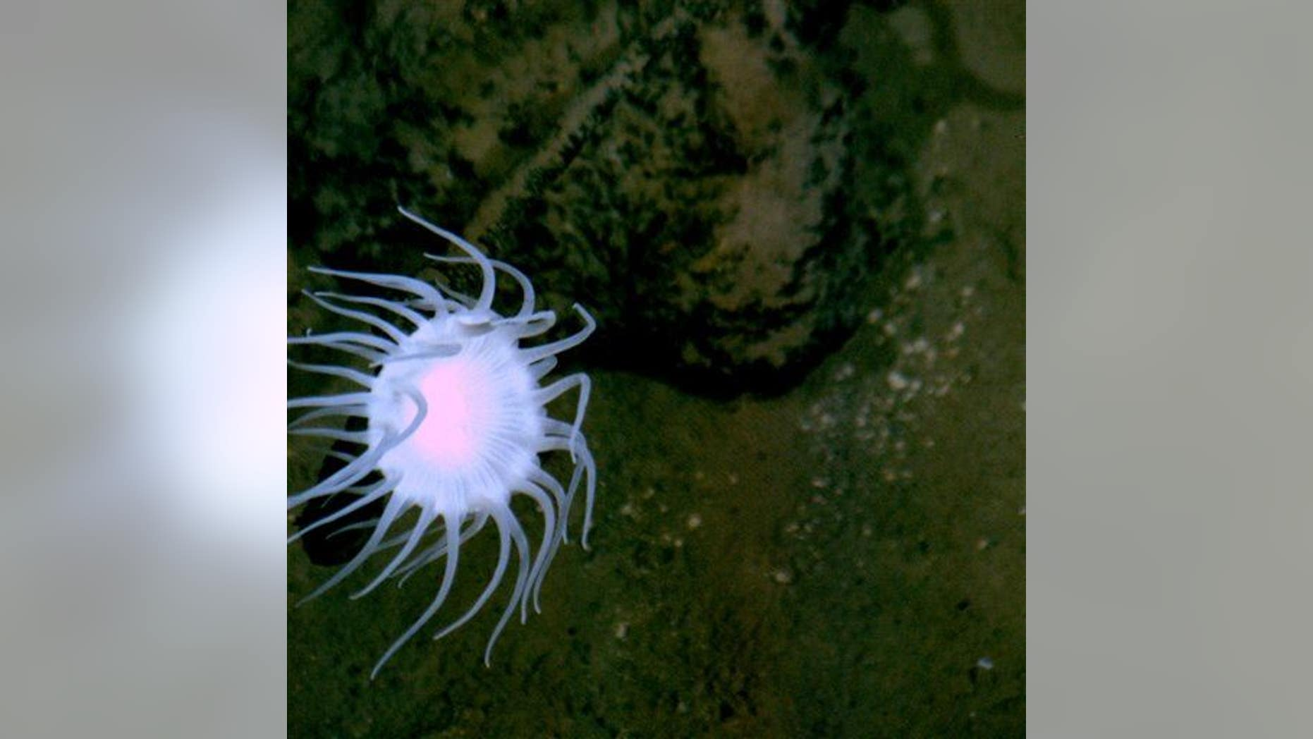 This handout photo shows the flat bottom of the Mariana Trench, on the edge, but not quite on the bottom of the deepest place on Earth.