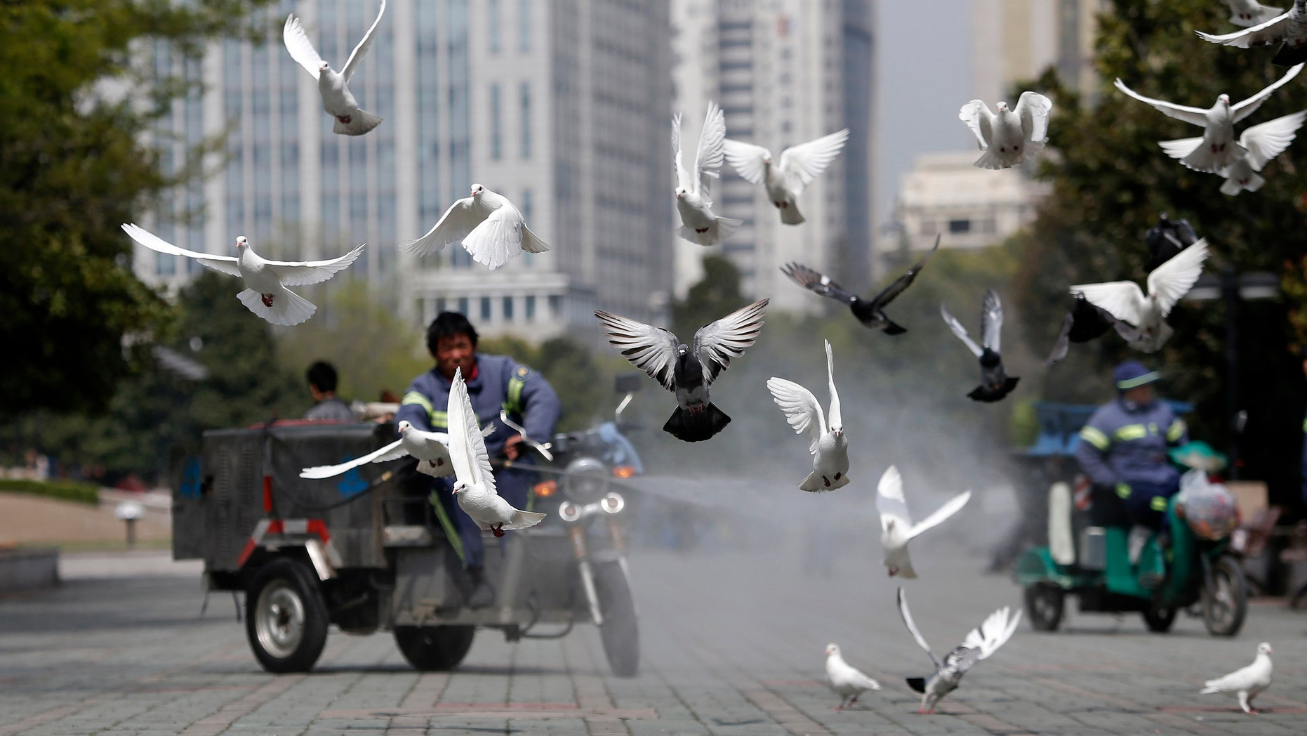 A public park staff cleans the feces of doves at a public area in People Square, downtown Shanghai. The death toll in China from a new strain of bird flu rose to nine on Tuesday.