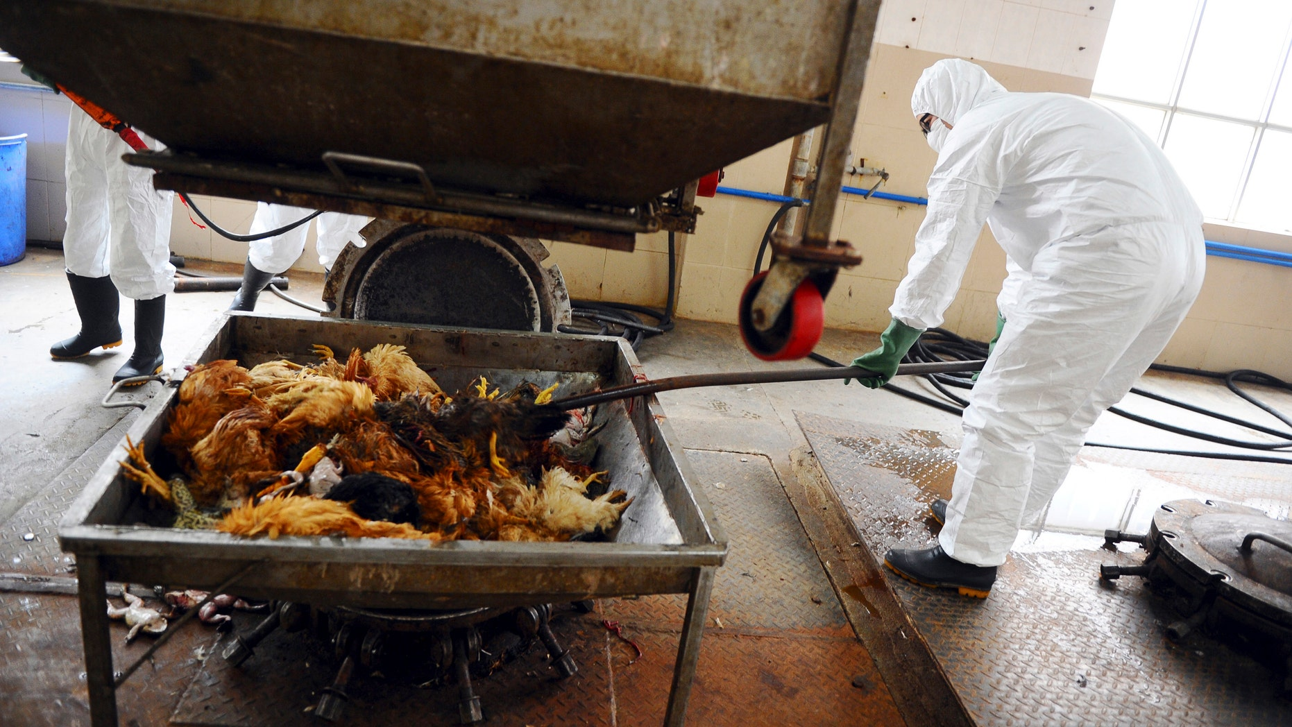 Employees dispose uninfected dead birds at a treatment plant as part of preventive measures against the H7N9 bird flu in Guangzhou, Guangdong province in China.