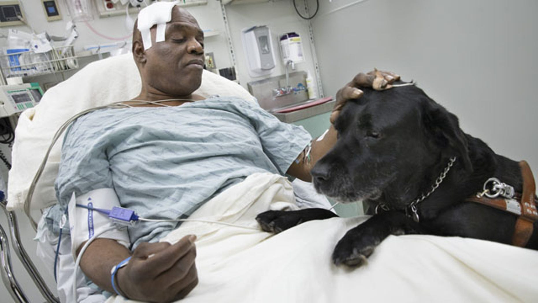 December 17, 2013: Cecil Williams pets his guide dog Orlando in his hospital bed following a fall onto subway tracks from the platform in New York. The blind 61-year-old Williams says he fainted while holding onto his black labrador who tried to save him from falling. Both escaped without serious injury. (AP Photo/John Minchillo)