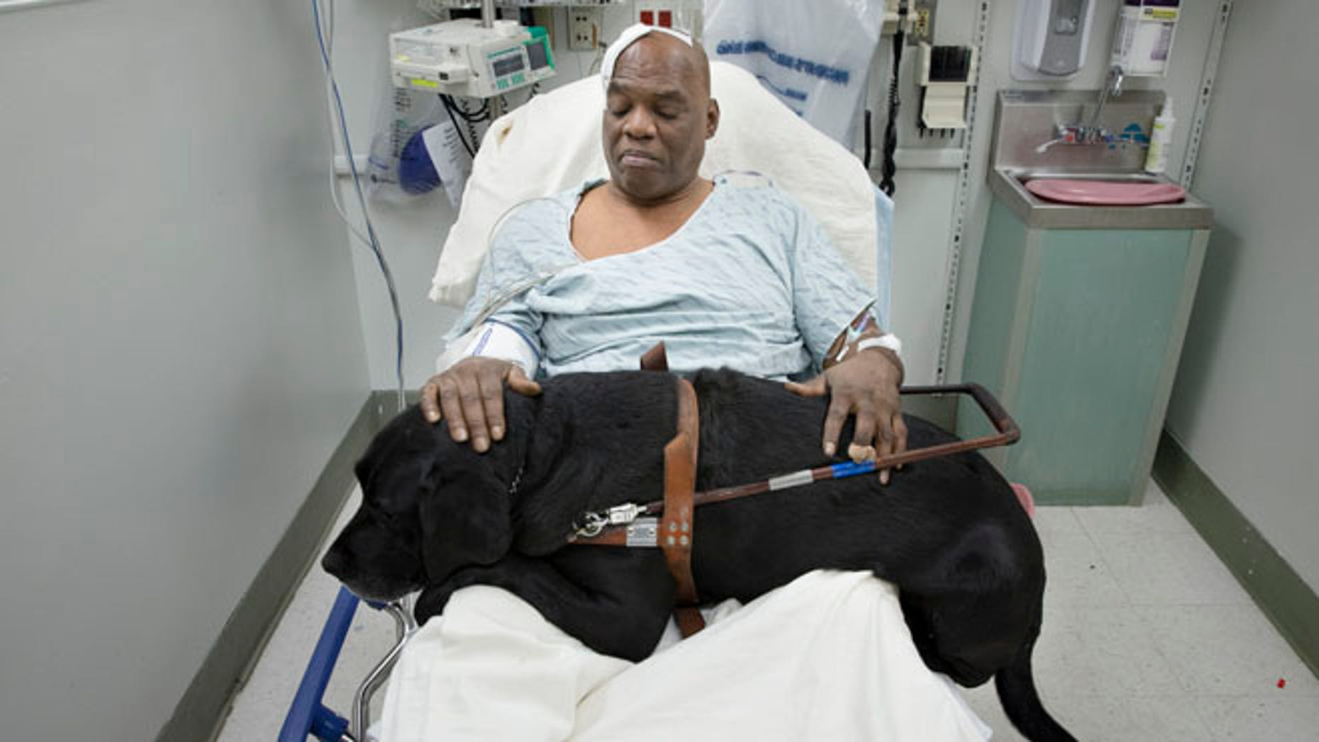 Dec. 17: Cecil Williams pets his guide dog Orlando in his hospital bed following a fall onto subway tracks from the platform in New York.