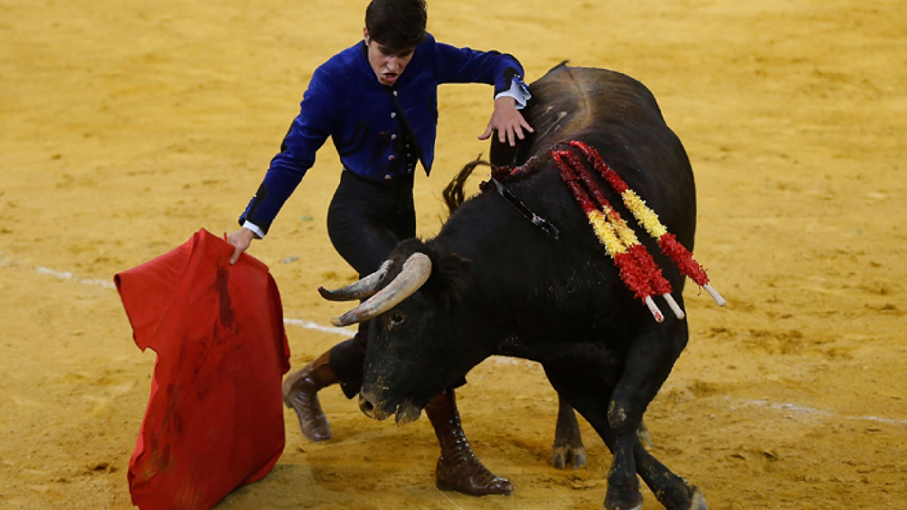 MADRID, SPAIN - MARCH 22:  Spanish bullfighter Alvaro Lorenzo performs during the Bullfighting Charity Festival in Madrid at at Palacio Vistalegre Arena bullring on March 22, 2014 in Madrid, Spain.  (Photo by Gonzalo Arroyo Moreno/Getty Images)
