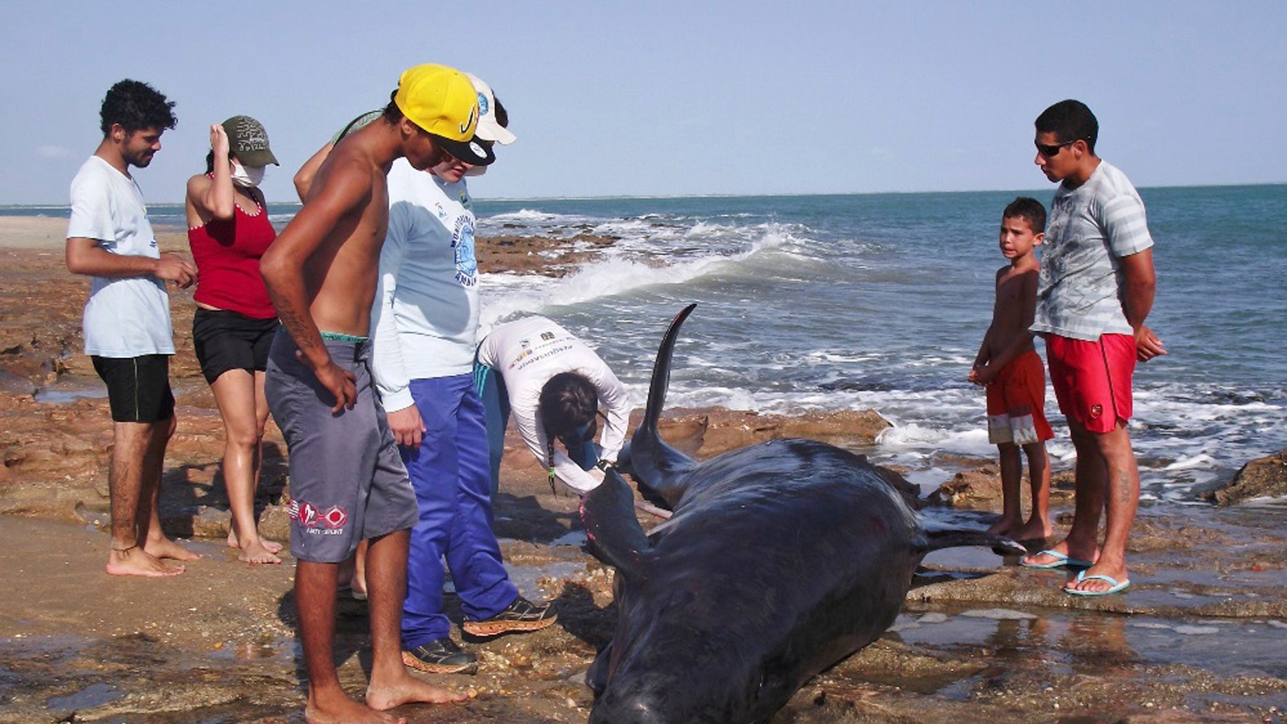 People look on as biologists inspect a dolphin on Upanema beach in the Areia Branca municipality of Rio Grande.