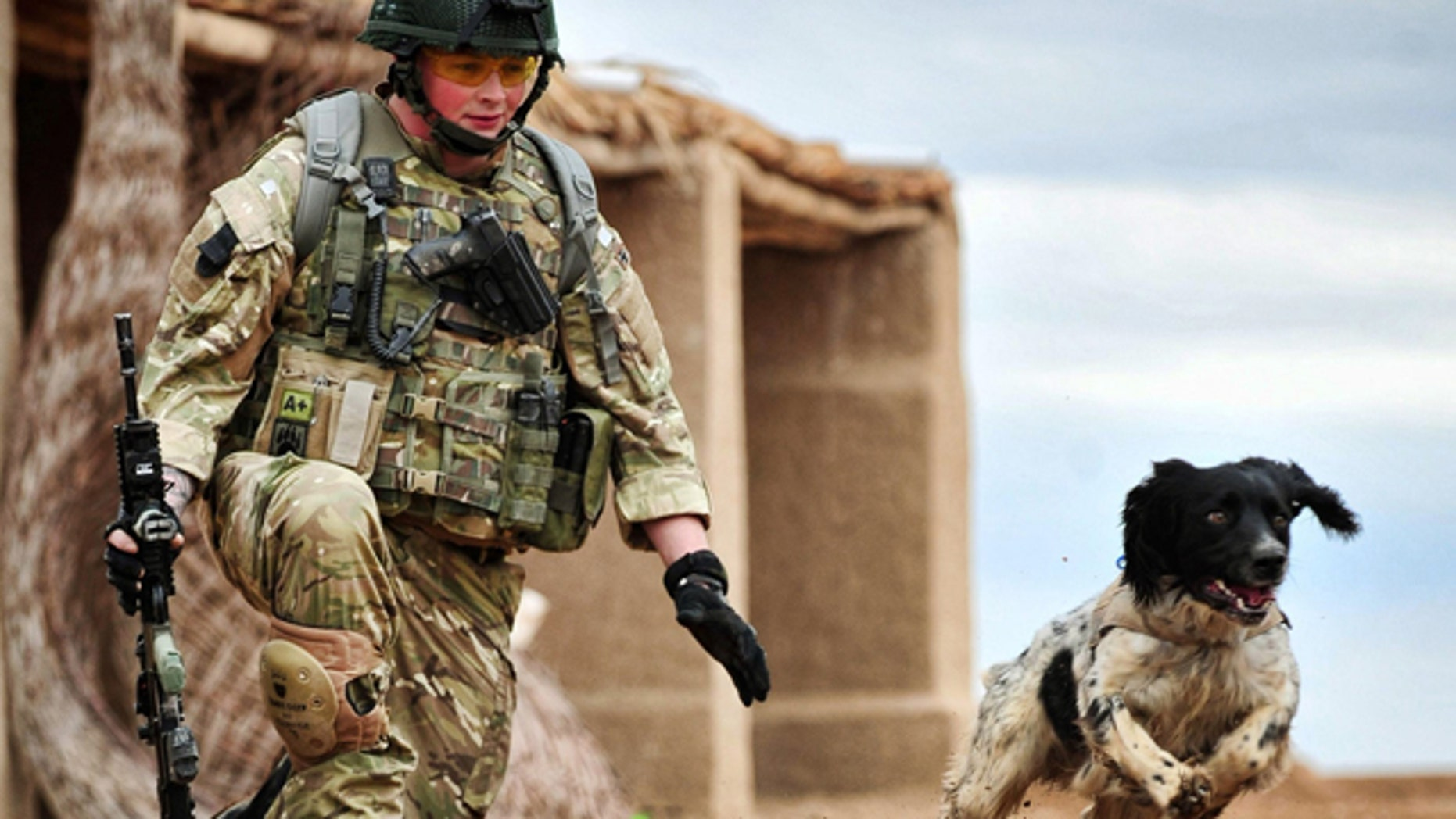 In this undated image made available in London by the Ministry of Defence,  Lance Corporal Liam Tasker trains with his Military Working Dog, Theo,  in Camp Bastion, Afghanistan. The body of Lance Corporal Tasker, a dog handler with the Royal Army Veterinary Corps who was killed in a firefight with insurgents in Helmand Province is to be repatriated to Britain, Thursday March 10, 2011, along with Theo, his bomb-sniffing springer spaniel, who suffered a fatal seizure hours later at a British army base