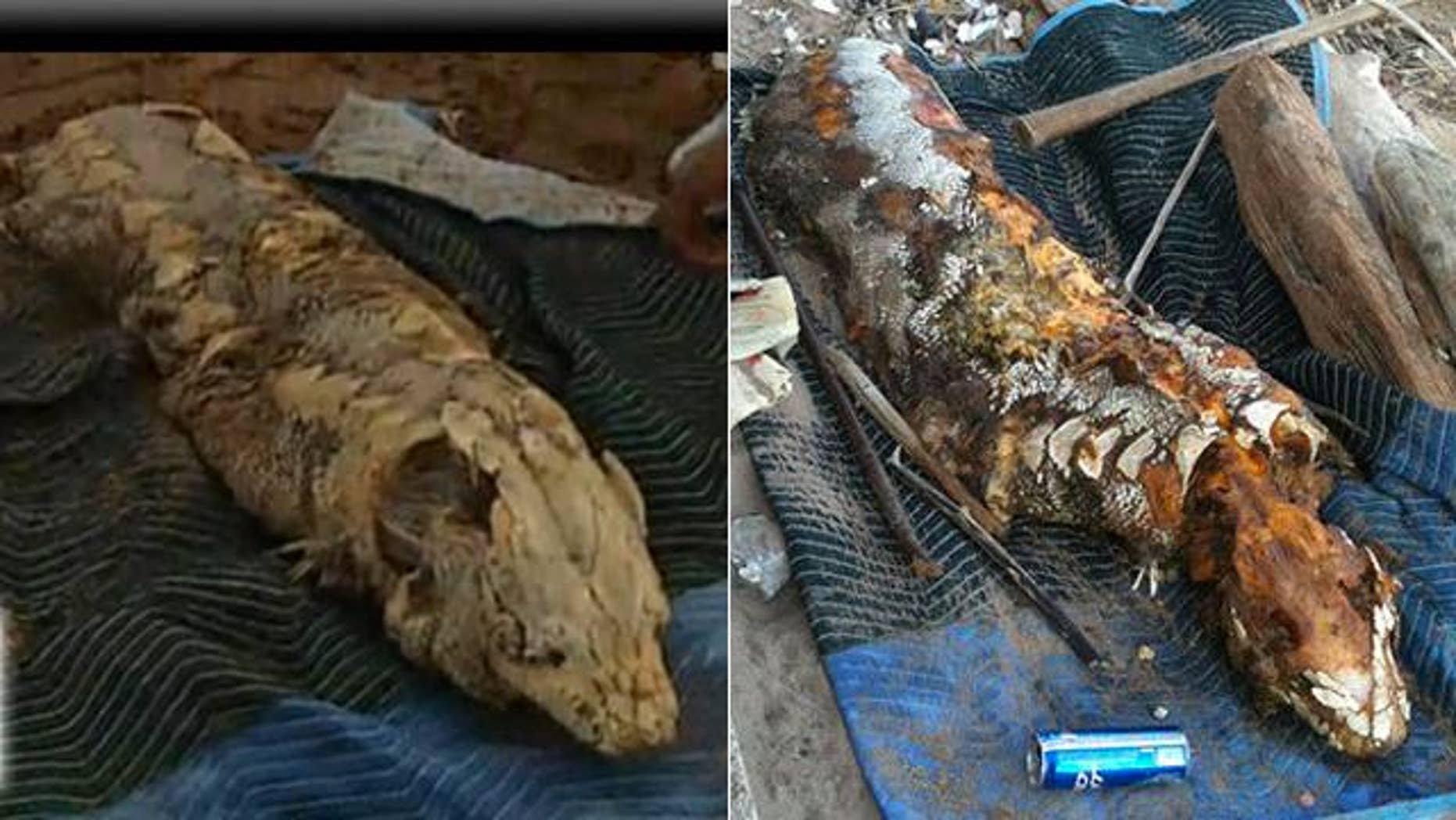 A 'sea monster' has washed up beneath the Brooklyn Bridge in New York. At left, the creature on May 21 in a frame from a NY1 video. At right, the beast 5 days later, as seen on Gawker.com.