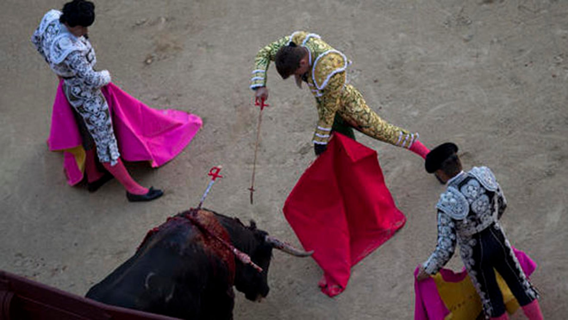 In this photo taken on Sunday, May 1, 2016, Spanish bullfighter Alvaro Garcia kills a Conde de Mayalde ranch's fighting bull during a bullfight at the Las Ventas bullring in Madrid, Spain. As matadors face half-ton bulls this month during Madrid's most important annual series of bullfights and Pamplona gears up for its chaotic July bull runs, tensions are building between anti-bullfighting forces and the traditions' defenders. (AP Photo/Francisco Seco)
