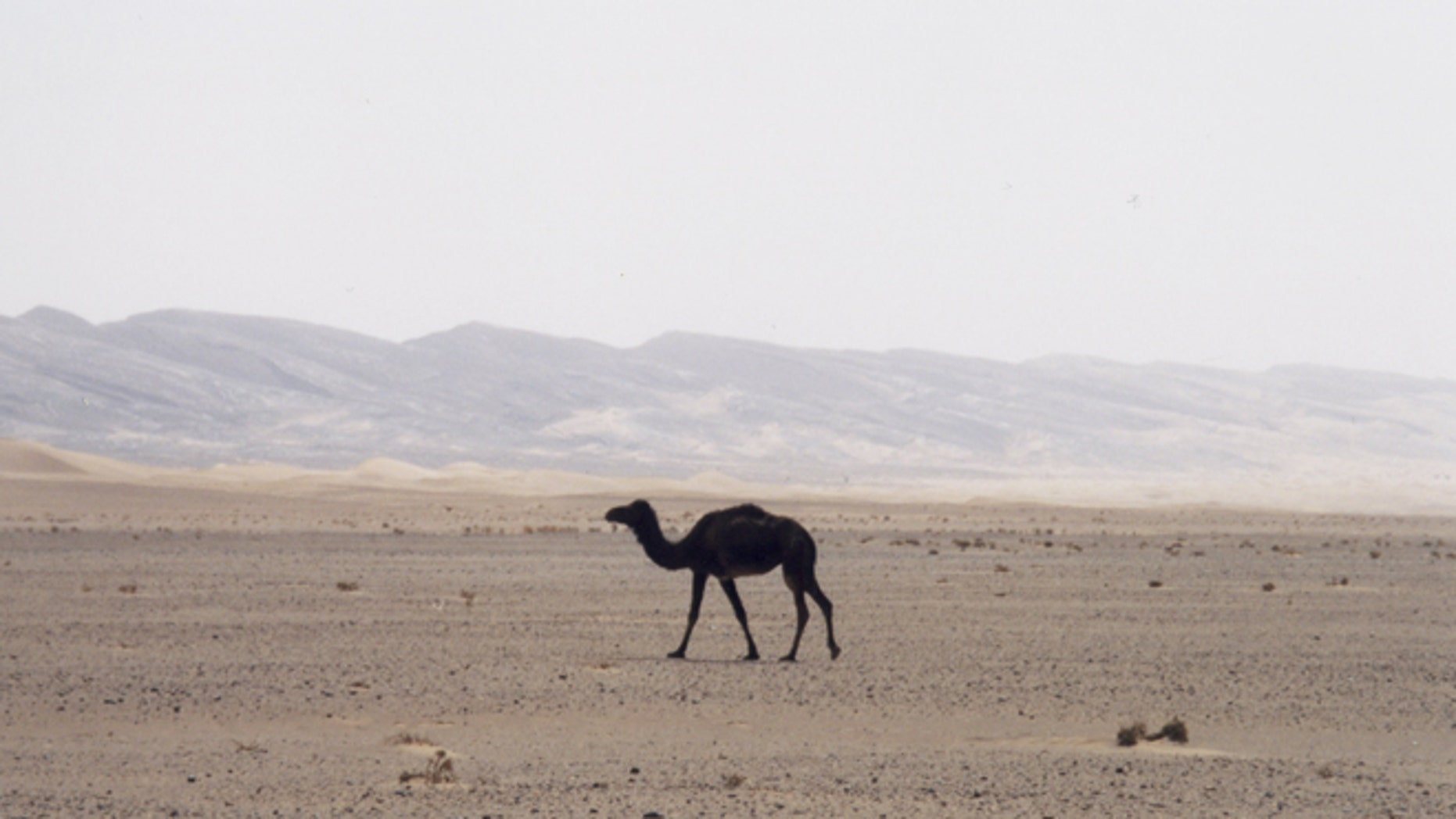 Archaeologists say they've pinpointed the domestication of camels in the Middle East -- and the science directly contradicts dates in the Bible.