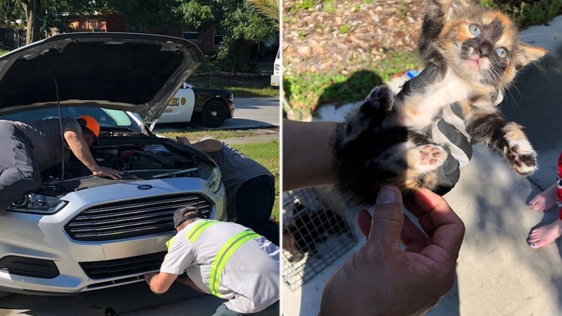 Ocoee Police Detective Michelle Grogan told Fox 35 that she heard the kittens as she was pulling out of her driveway.