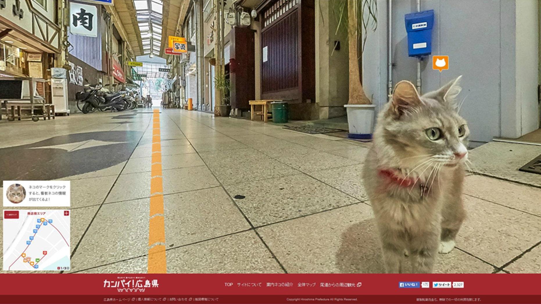 Screenshot of http://hiroshima-welcome.jp/kanpai/catstreetview