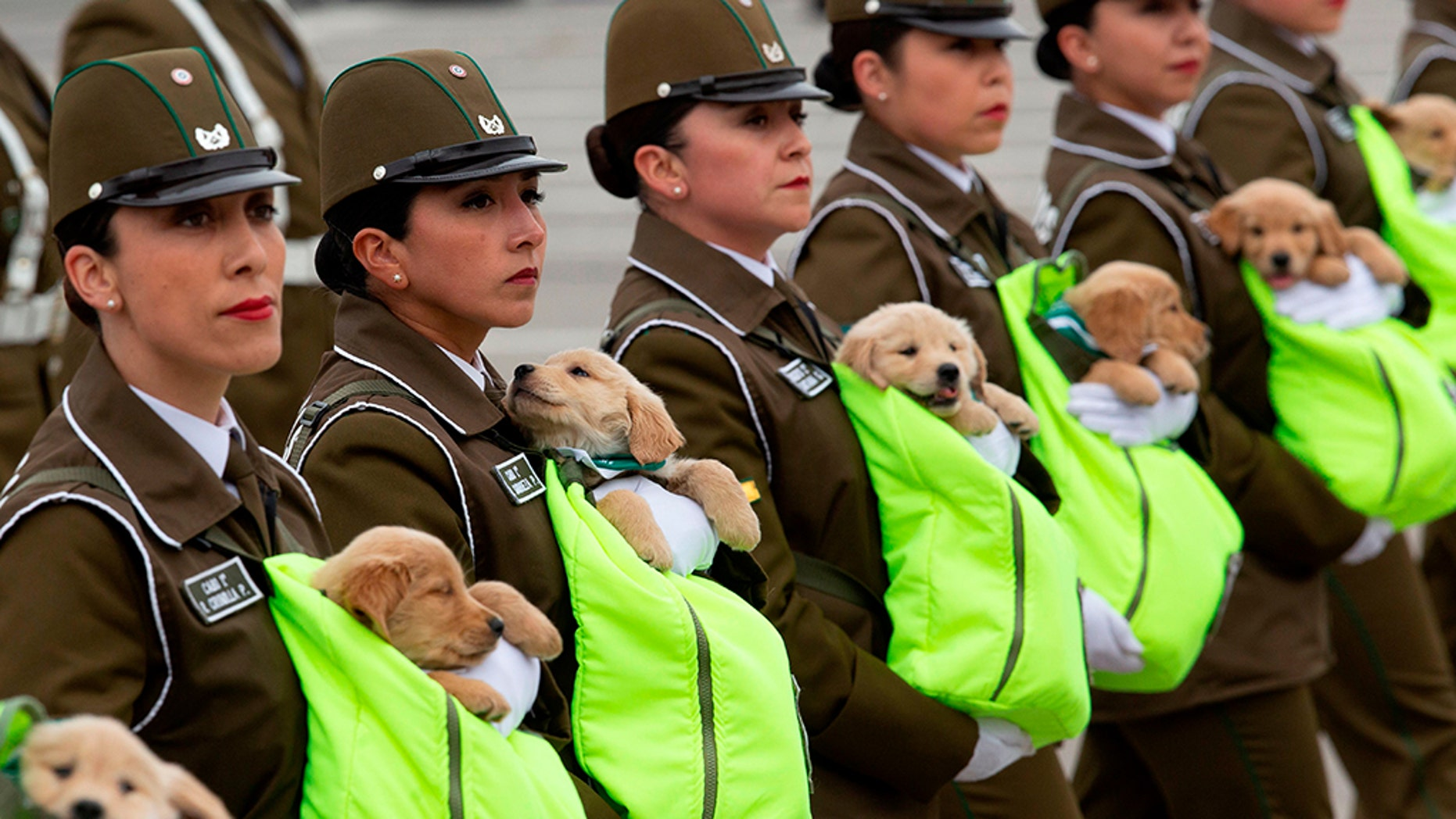 Female Chilean police officers march with puppies, future police dogs, during the celebration parade of Chile's 208th Independence anniversary.