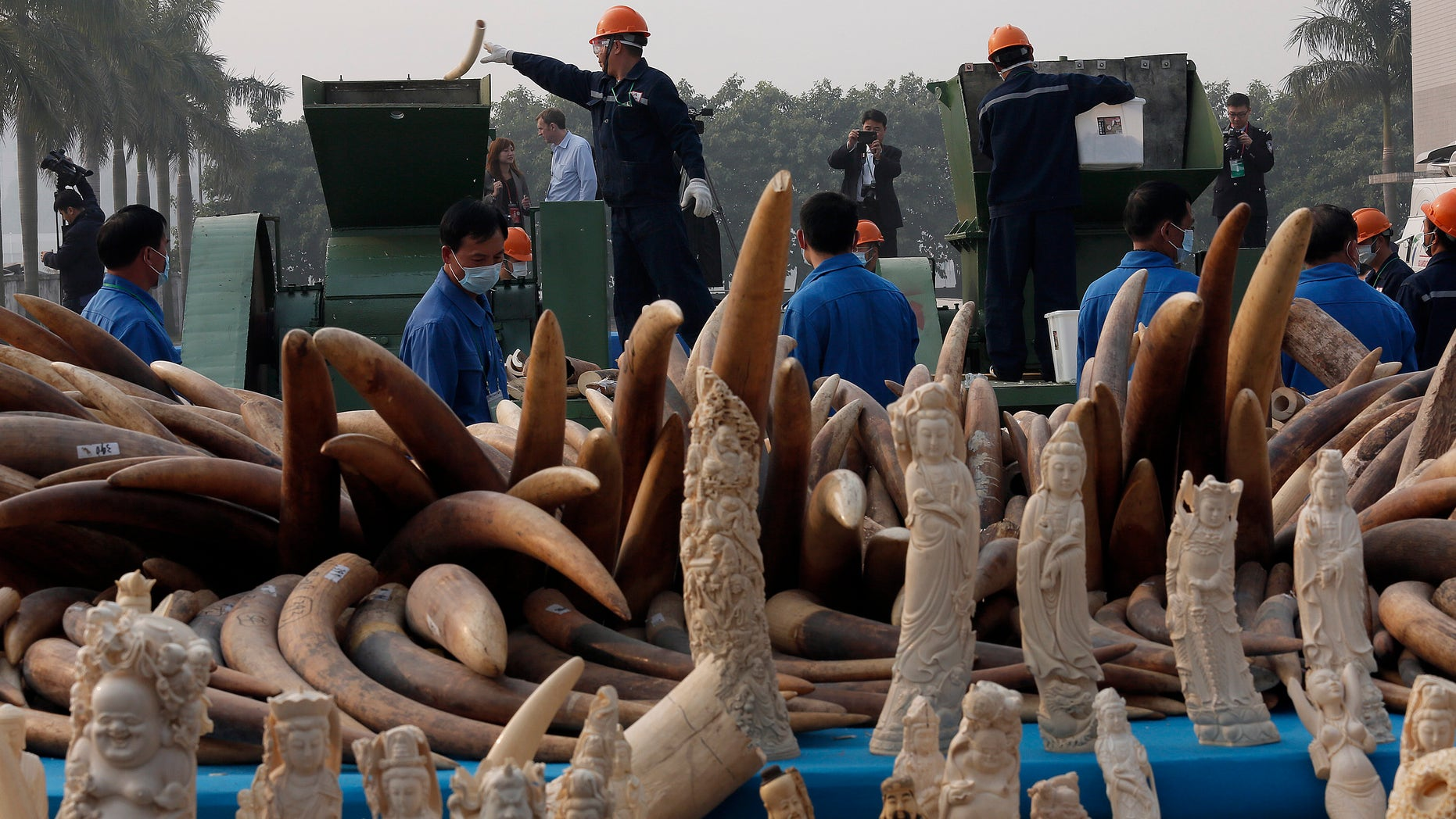 Jan. 6, 2014 - Workers destroy illegal ivory in Dongguan, southern Guangdong province, China. China destroyed about 6 tons of illegal ivory from its stockpile in an unprecedented move wildlife groups say shows growing concern about the black market trade by authorities in the world's biggest market for elephant tusks.
