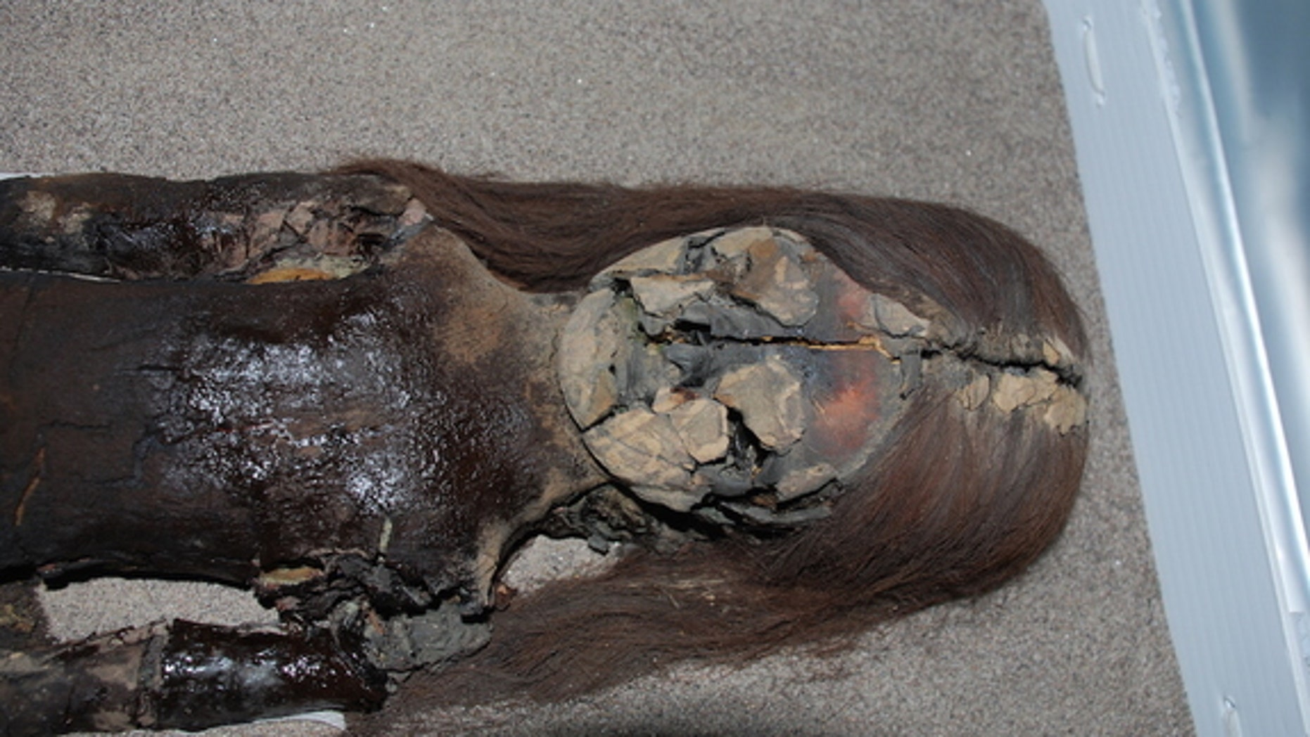 The black chest of this Chinchorro mummy shows signs of degradation, even though it is housed at the University of Tarapacá's archeological museum in Arica, Chile.
