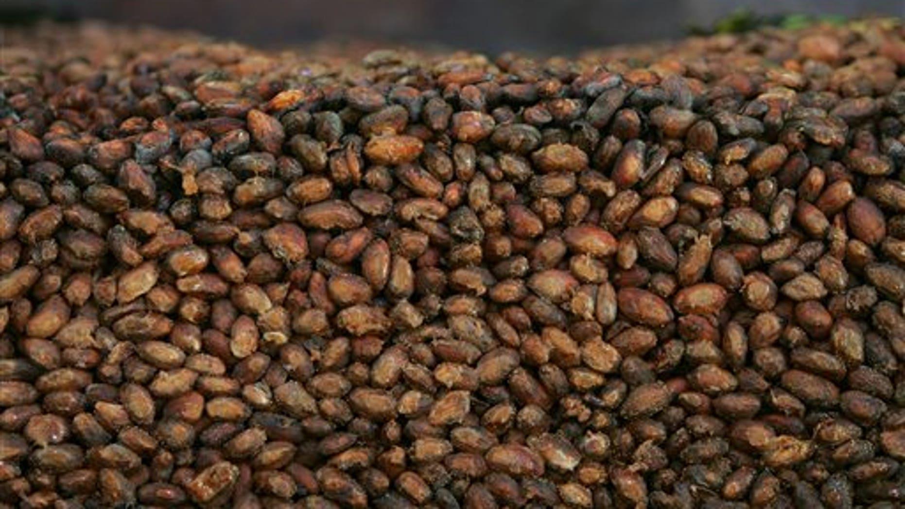 File - This Thursday, Nov. 24, 2005 file photo shows organic cocoa beans.
