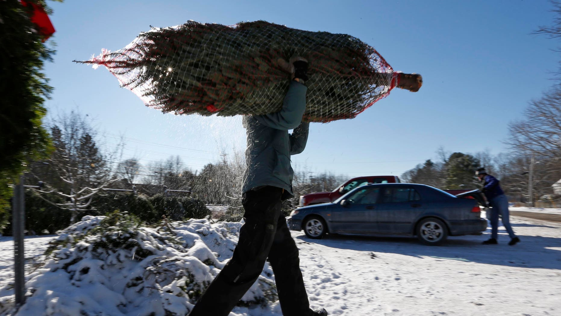 In this Dec. 12, 2013 photo, a Christmas tree seller carries a tree to a customer's car in Freeport, Maine. Growers say the late Thanksgiving shortened the holiday season by a week and that means they're getting a deluge of demand in a short period of time. (AP Photo/Robert F. Bukaty)