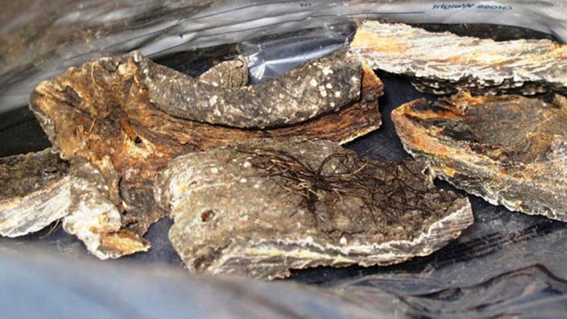 This photo released by U.S. Customs & Border Protection, shows elephant meat, one of several contraband items seized by the agency at Los Angeles International Airport between May 6 and 10.