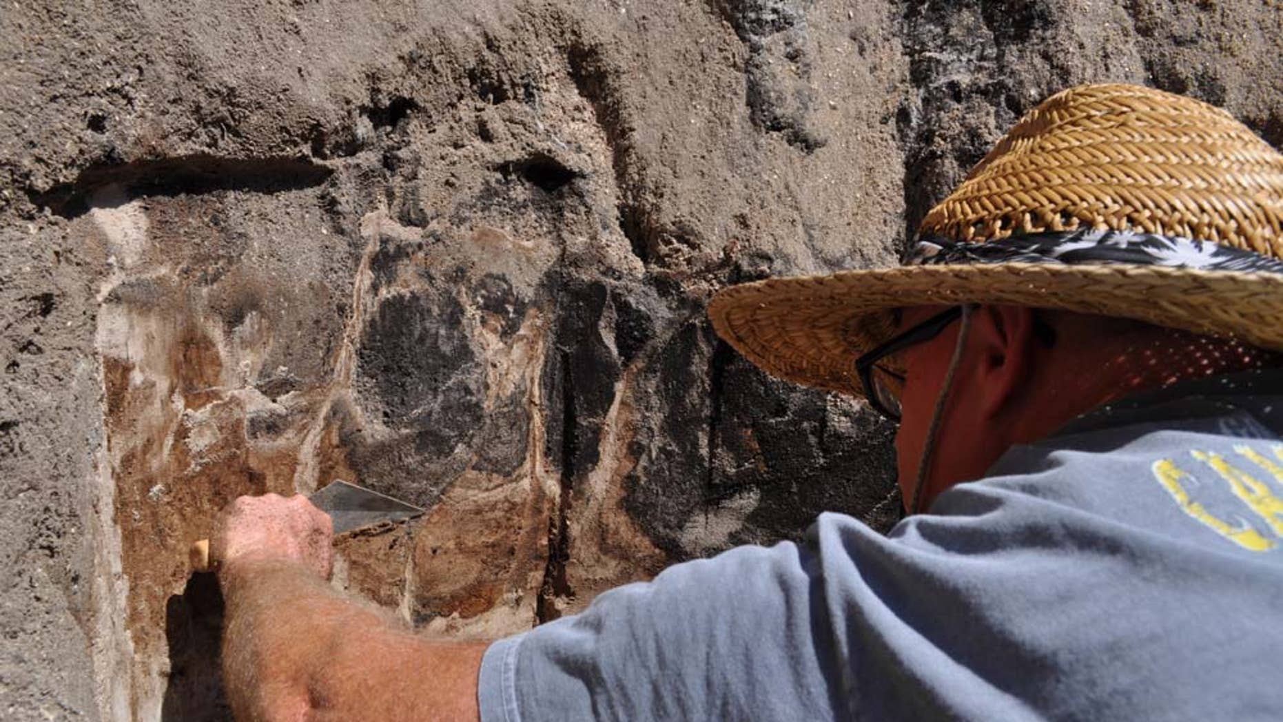 Scientists uncovered the bones of an ancient, extinct species of bison in Vero Beach, Fla.