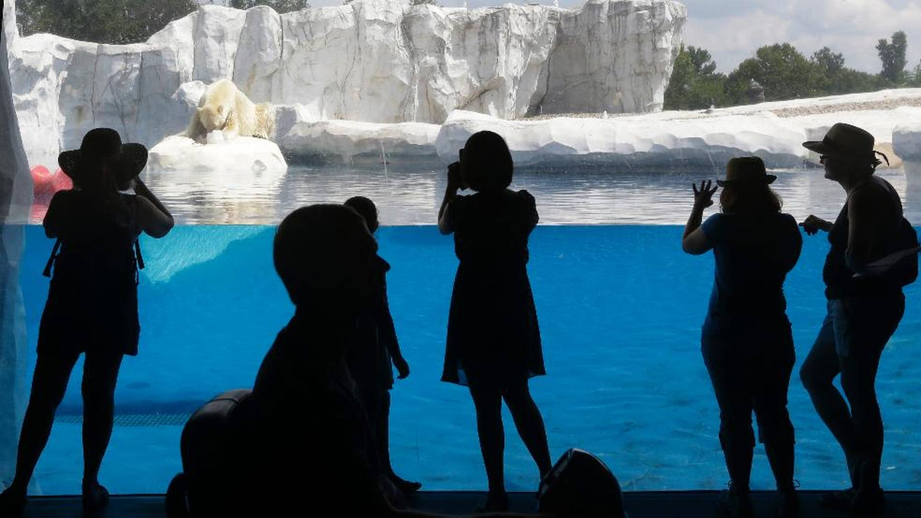 FILE--In this July 17, 2013 file photo, visitors to the Detroit Zoo watch as Nuka, an 8-year-old polar bear snacks on a frozen treat of fish incased in ice at the zoo in Royal Oak, Mich. The zoo says Monday, April 20, 2015 that construction on the anaerobic biodigester begins this spring and will be completed this year. The biodigester will turn about 400 tons of manure a year as well as other organic waste into methane-rich gas. (AP Photo/Carlos Osorio, file)