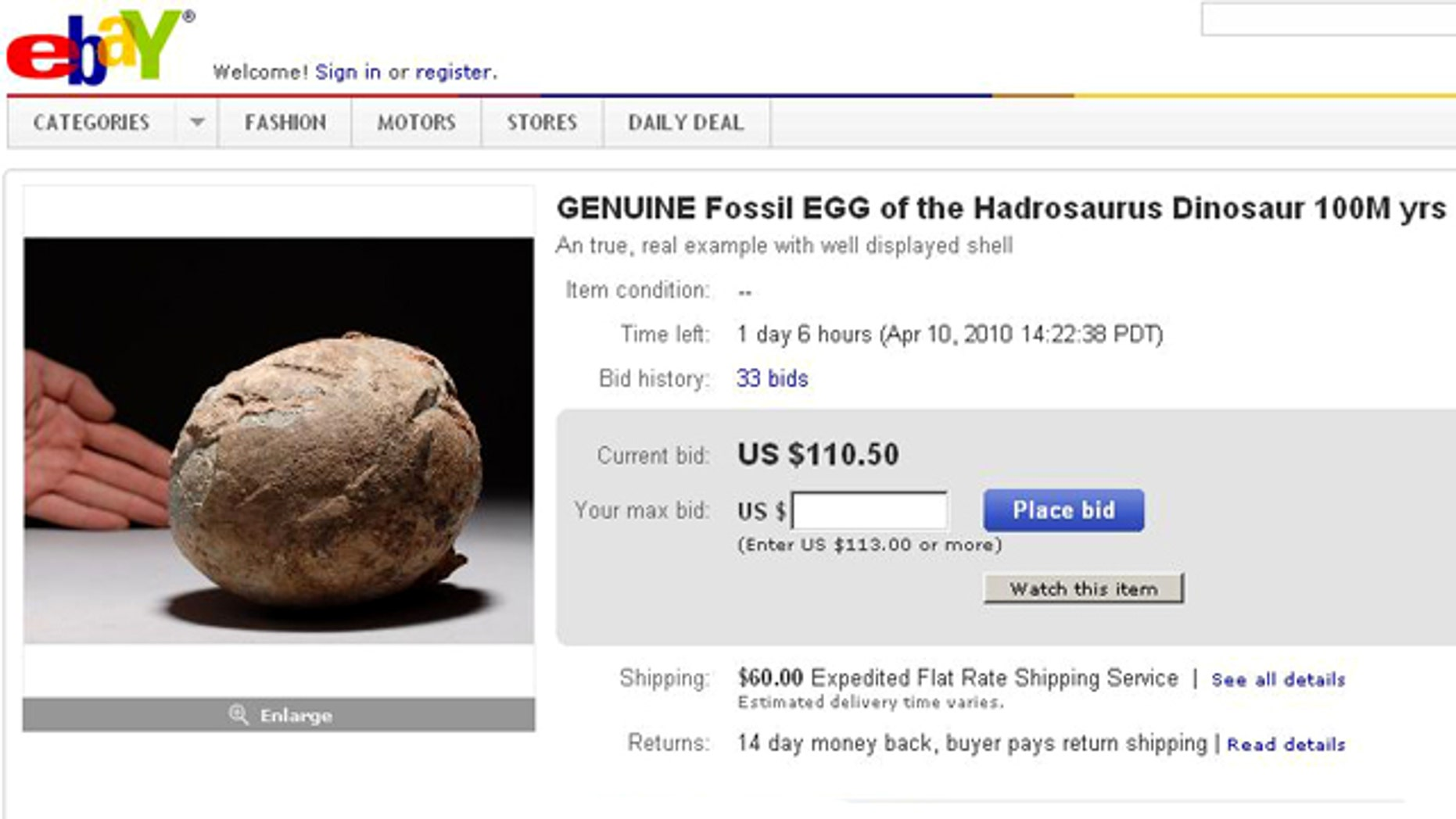 Fossils -- such as this Hadrosaurus egg on eBay -- are big business, and unfortunately can inspire theft.