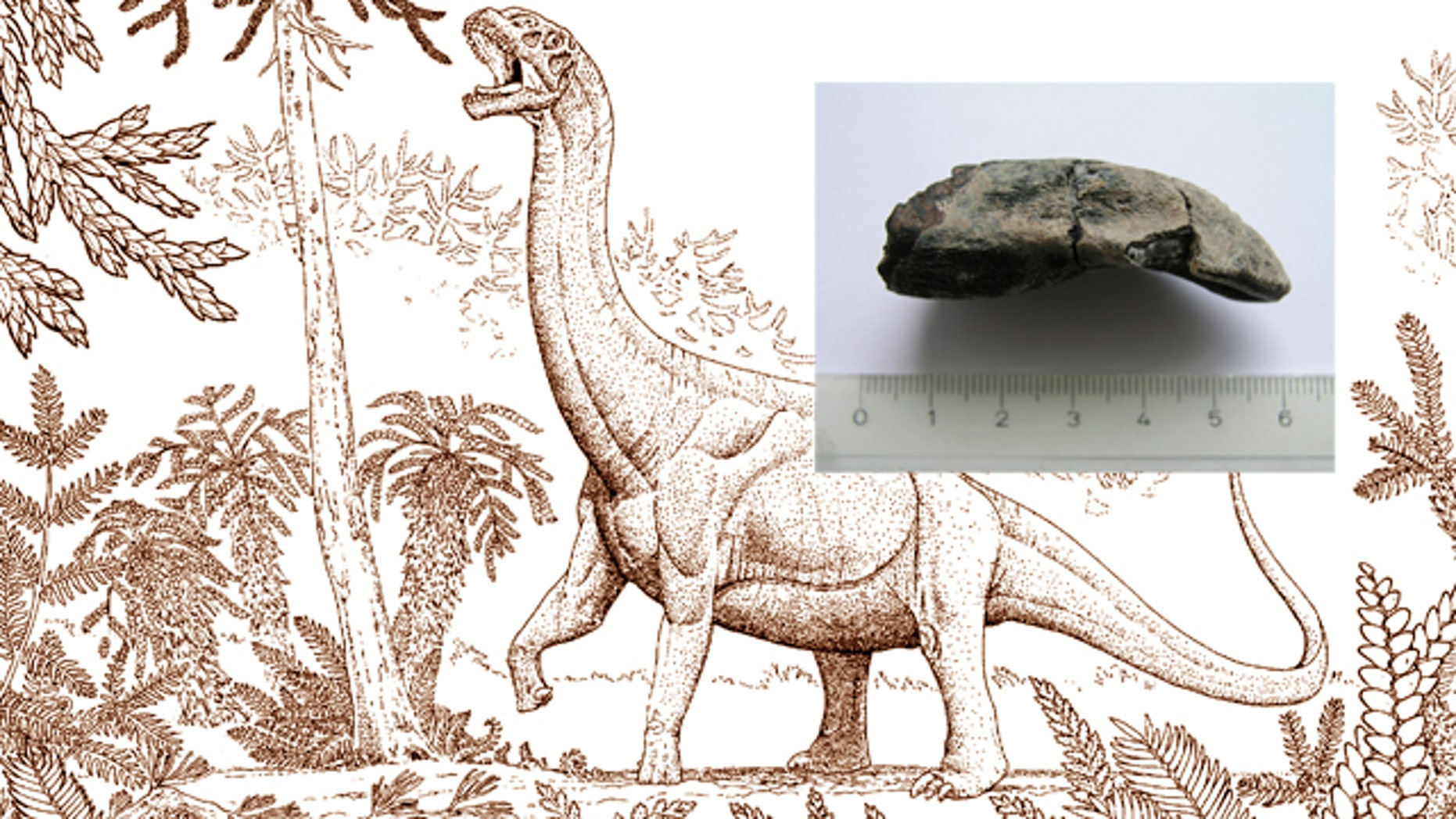 Scientists have figured out a way to take the temperature of dinosaurs, and it turns out to be almost the same as ours. Of course you can't just stick a thermometer under the tongue of a room-sized creature that's been extinct for millions of years. So they did the next best thing, they studied dinosaur teeth.