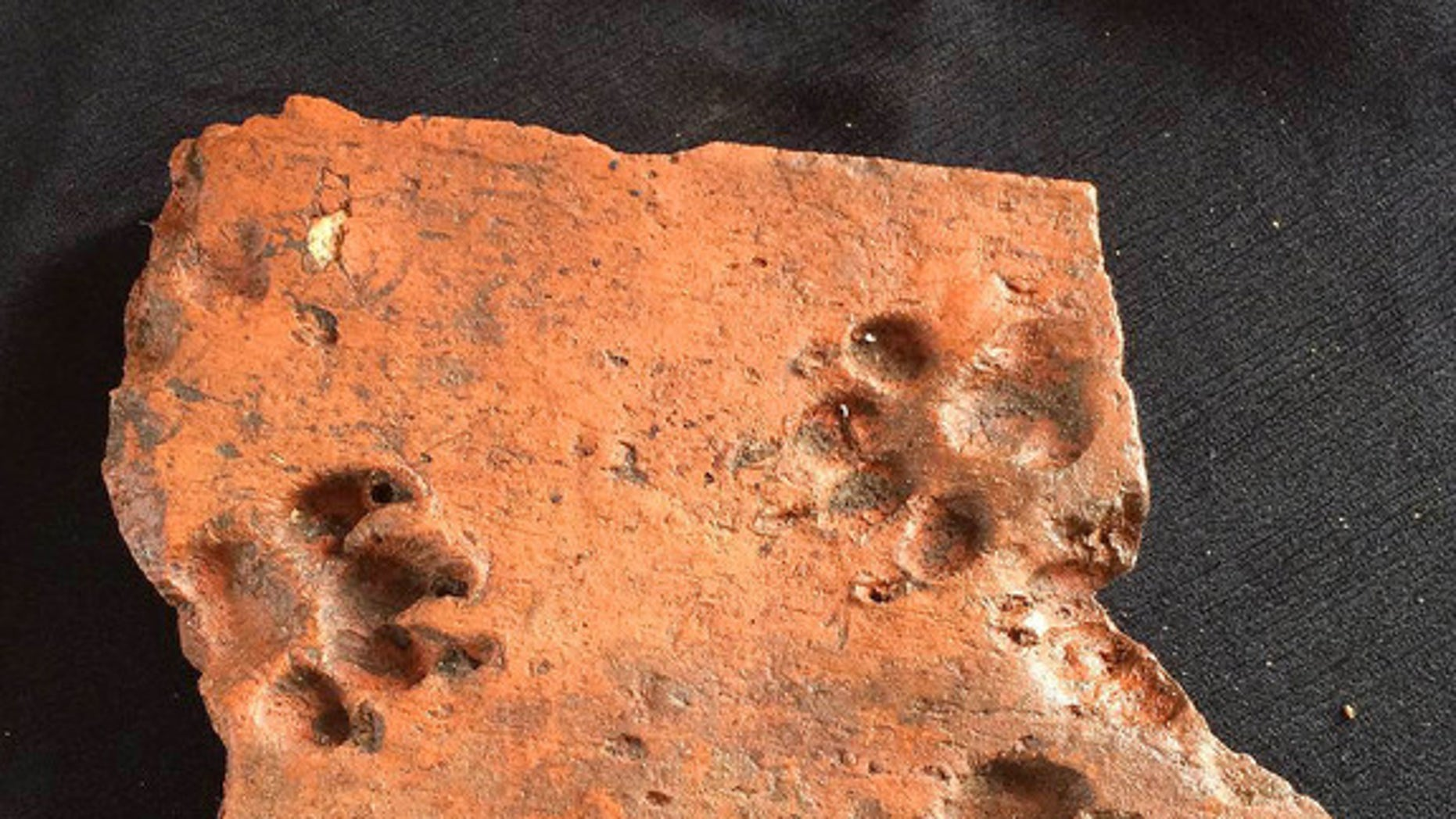A dog pushed its paws into this ancient Roman tile before it could dry.