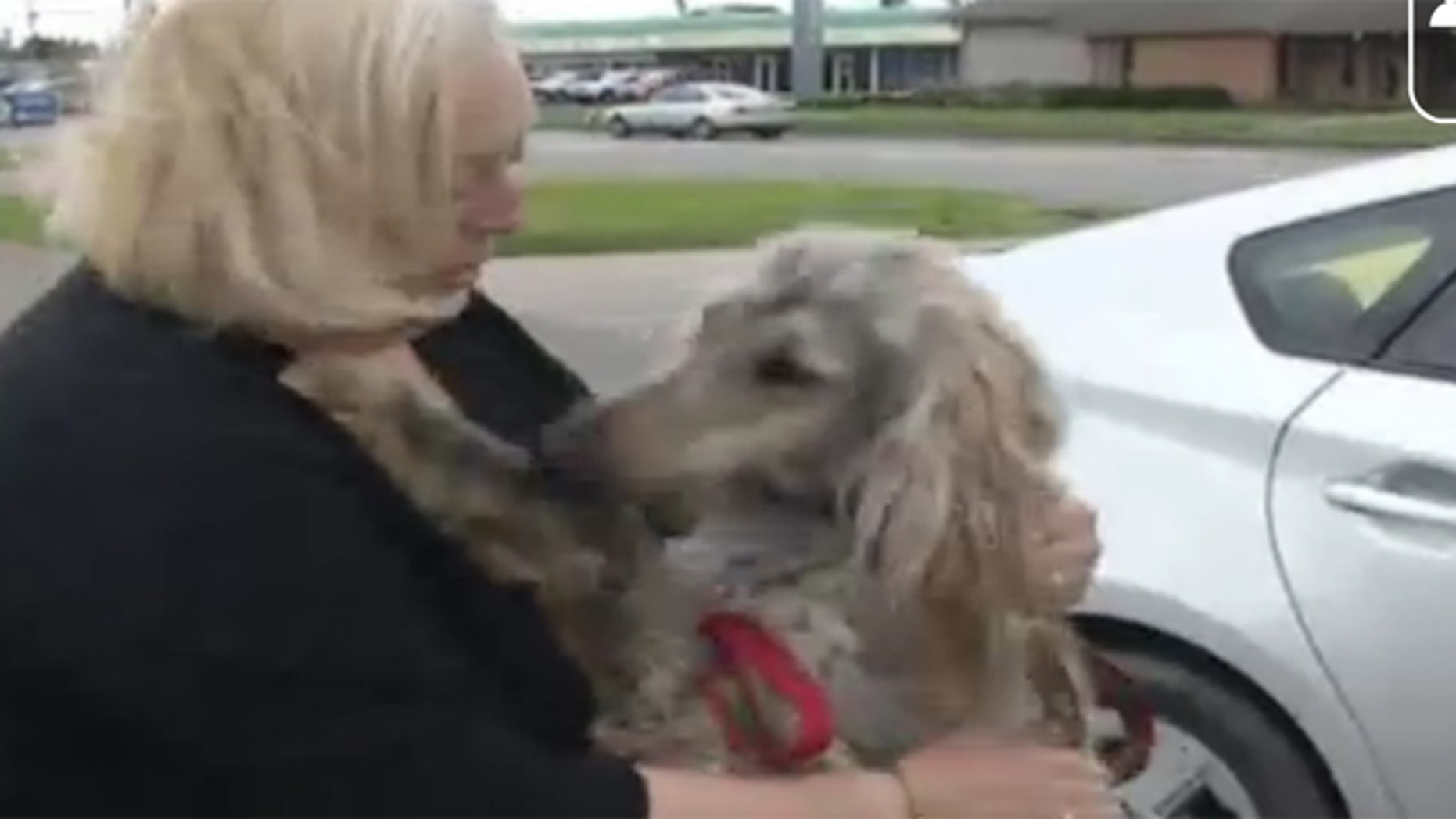 April 3, 2012: Jody Gardner plays with a dog the same breed as her missing dog, Flower.