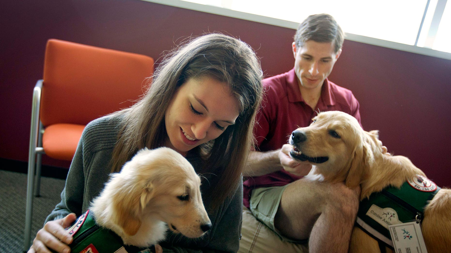 May 2, 2012: In this photo, law students Josh Richey, 22, right, and Lindsay Stewart, 26, play with Hooch, a 19-month-old golden retriever, right, and Stanley, a 4-month-old golden retriever, in between final exams at Emory University in Atlanta.