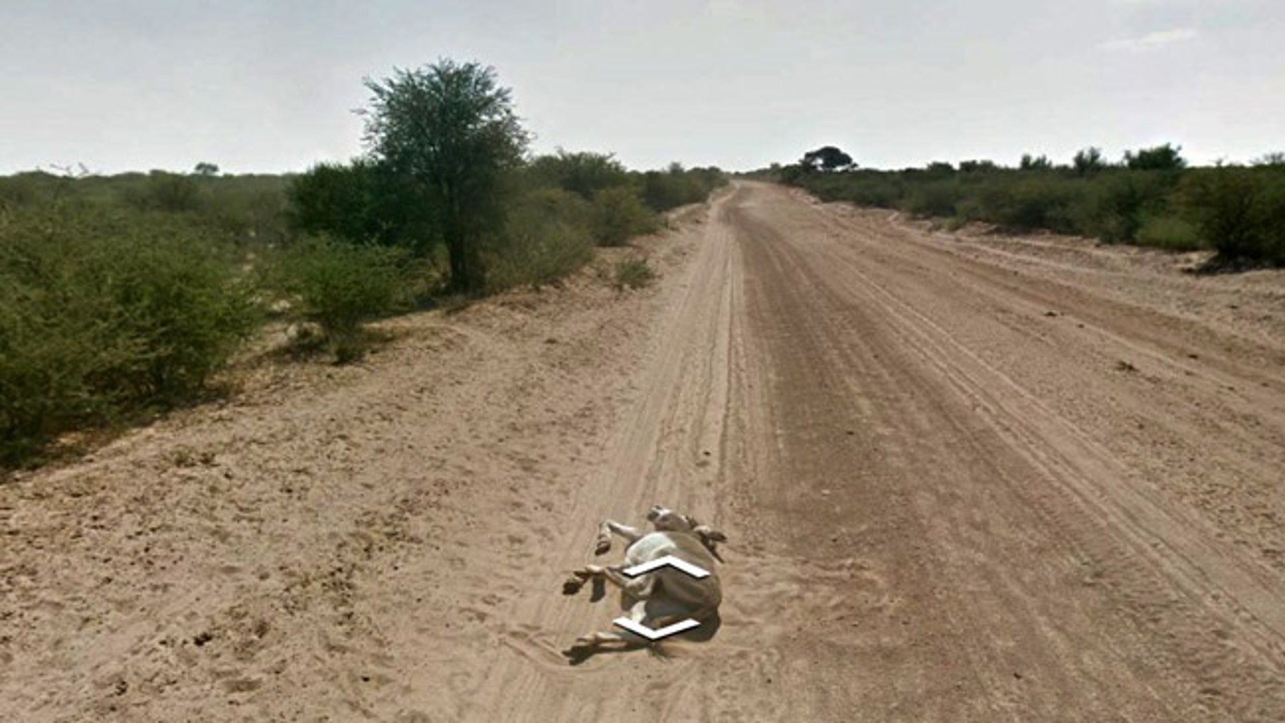 Eagle-eyed web users say this Google Street View image proves that a Google mapping car ran over a donkey.