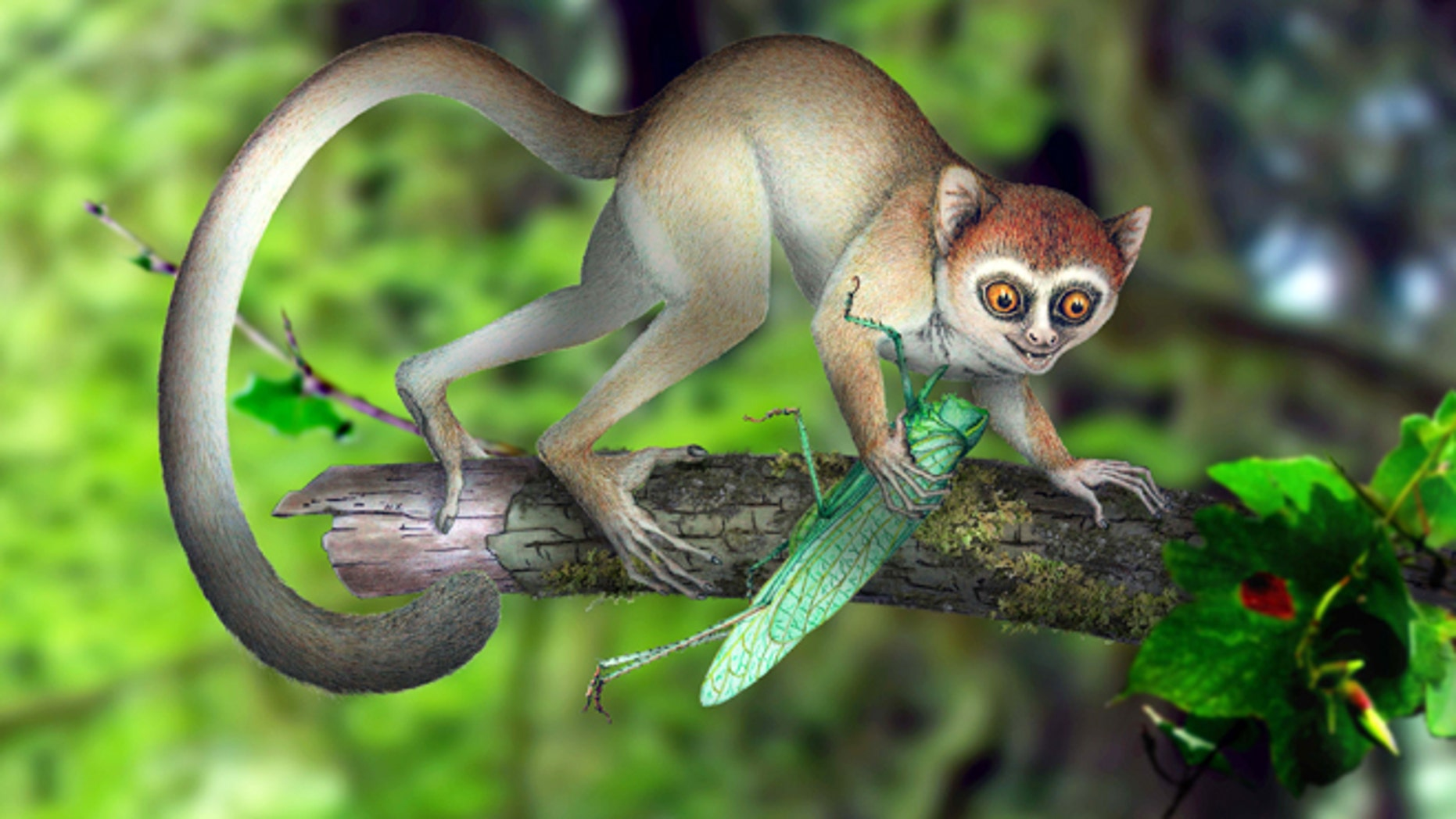 A reconstruction of Archicebus achilles in its natural habitat of trees. One of our earliest primate relatives was a hyperactive wide-eyed creature so small you could fit a few of them in your hand, if they would just stay still long enough, new fossil evidence shows.