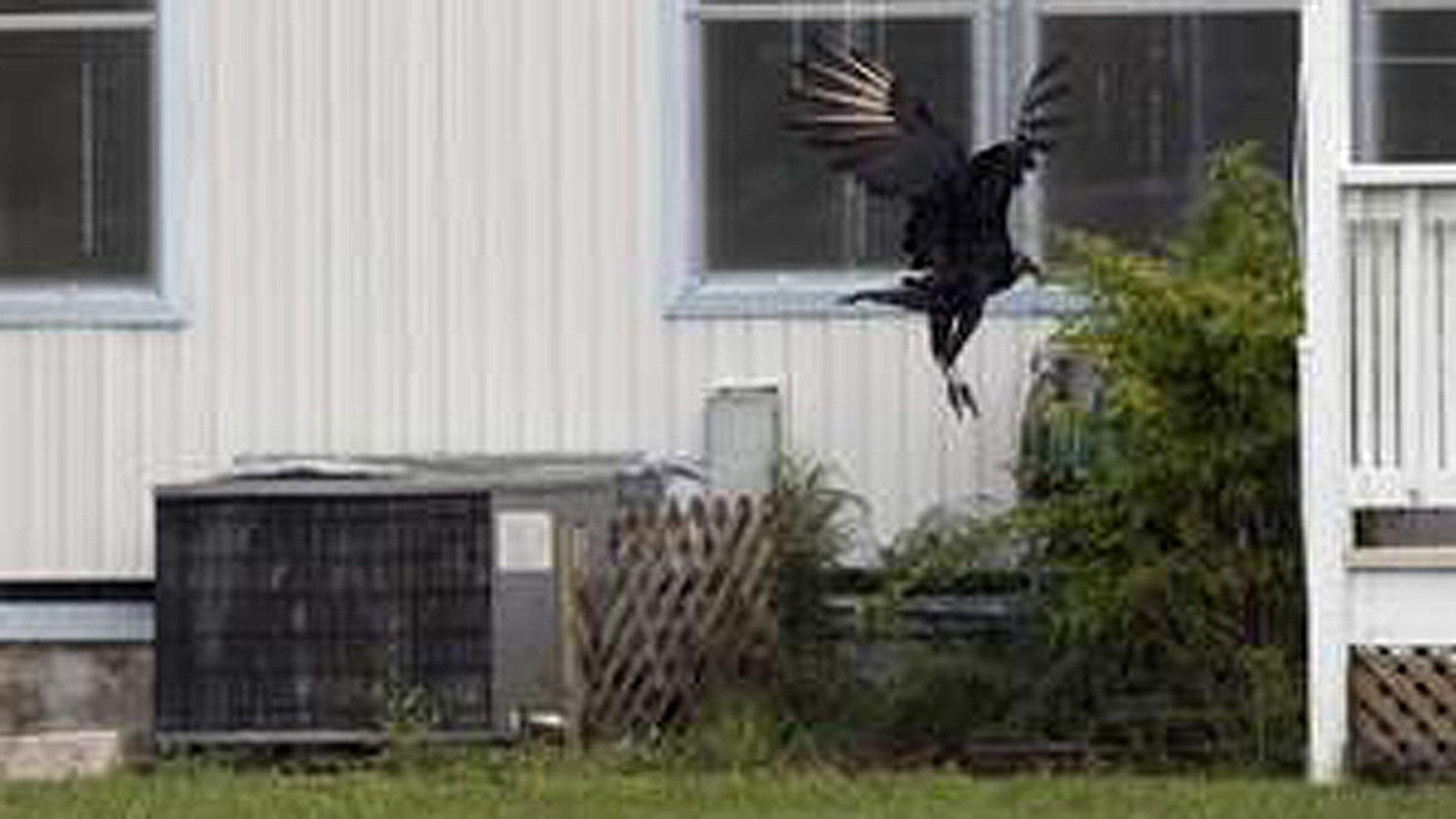 Dave and Judy Harting have struggled to combat the flock of vultures that have swarmed their Florida home.