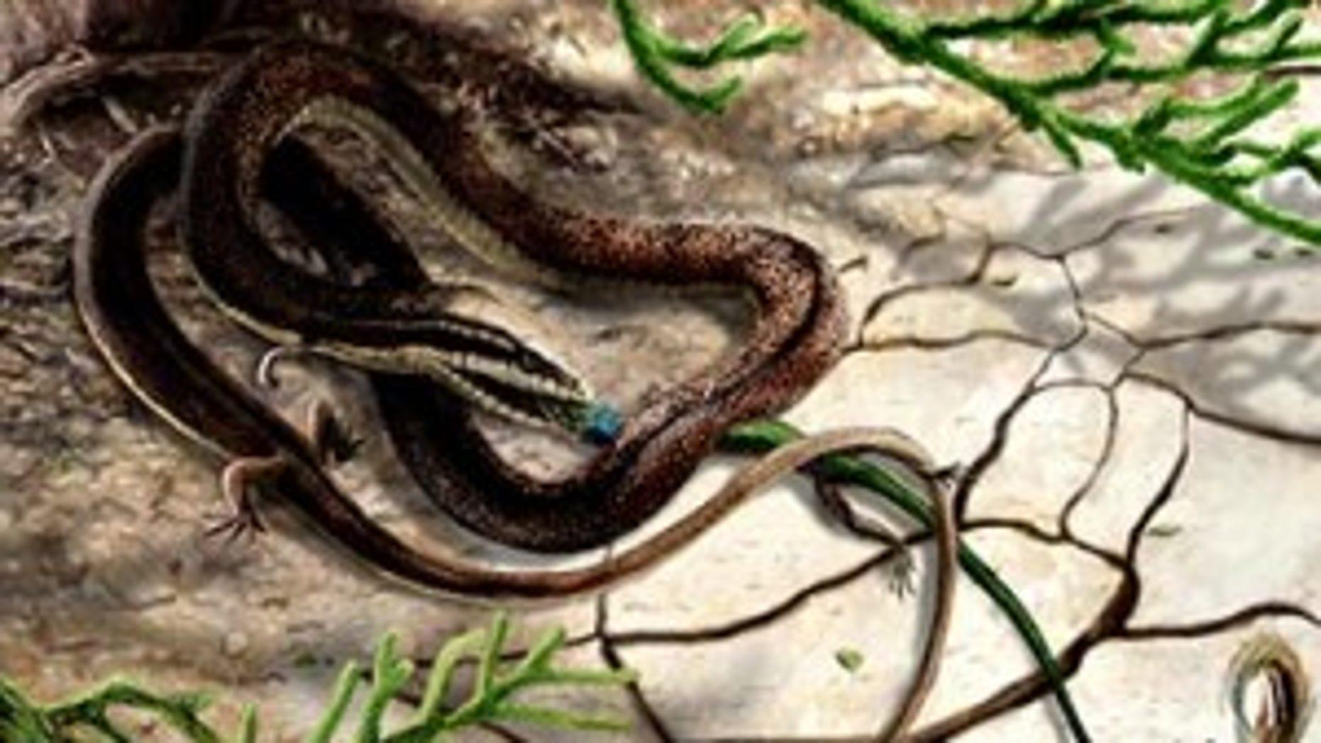 Artist's impression of Tetrapodophis amplectus with its prey, olindalacerta (salamander).