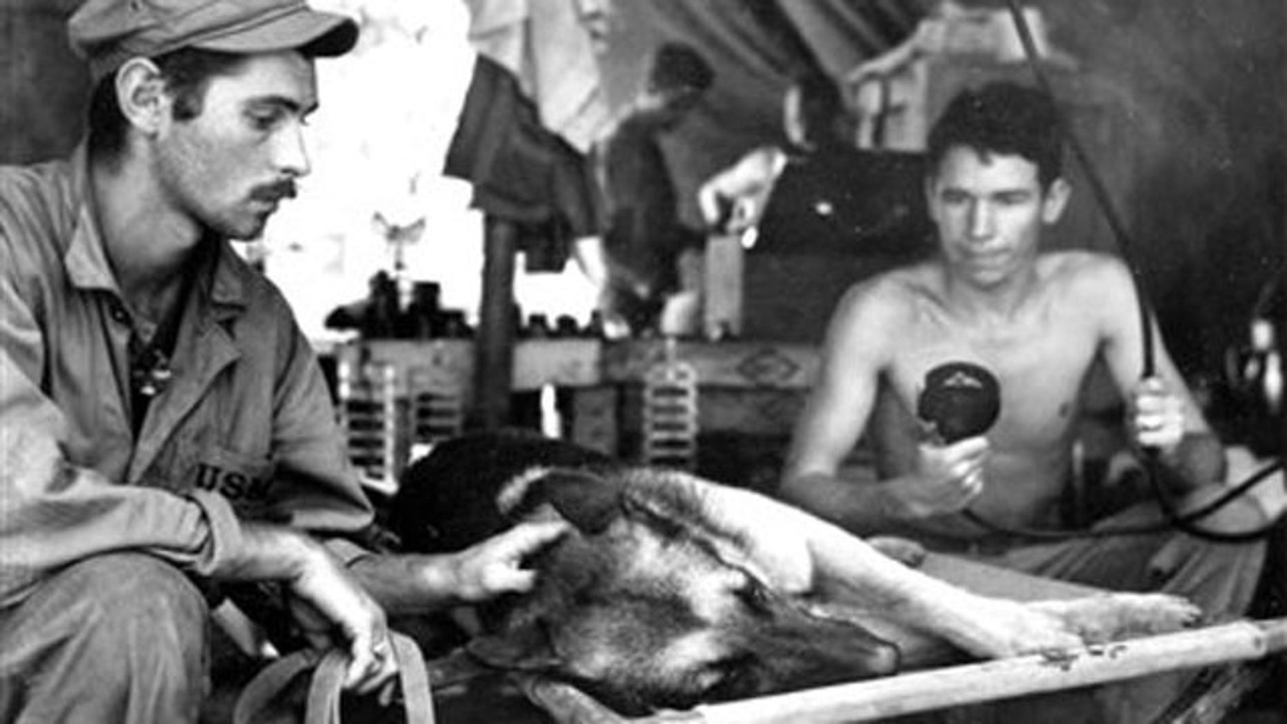 """This undated photo provided by the National Archives via the National World War II Museum shows a Marine Corps dog handler as he comforts his German shepherd while the dog is X-rayed after being shot by a Japanese sniper on Bougainville, The dog died of its injuries. The photograph is part of an exhibit, titled """"Loyal Force: Animals at War,"""" to be displayed at the National World War II Museum in New Orleans from July 22-Oct. 17. (AP Photo/National Archives via the National World War II Museum)"""