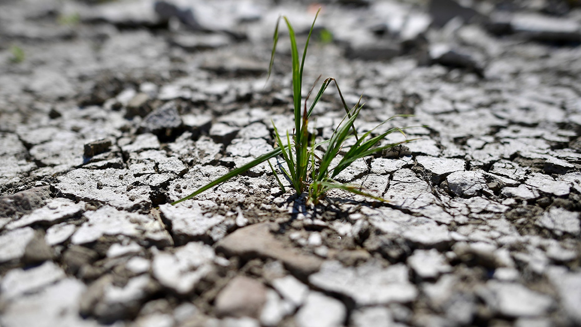 A plant is pictured in a dried out riverbed in Magdeburg, Germany. A heatwave continues to roil the country and wreak havoc on farmland.