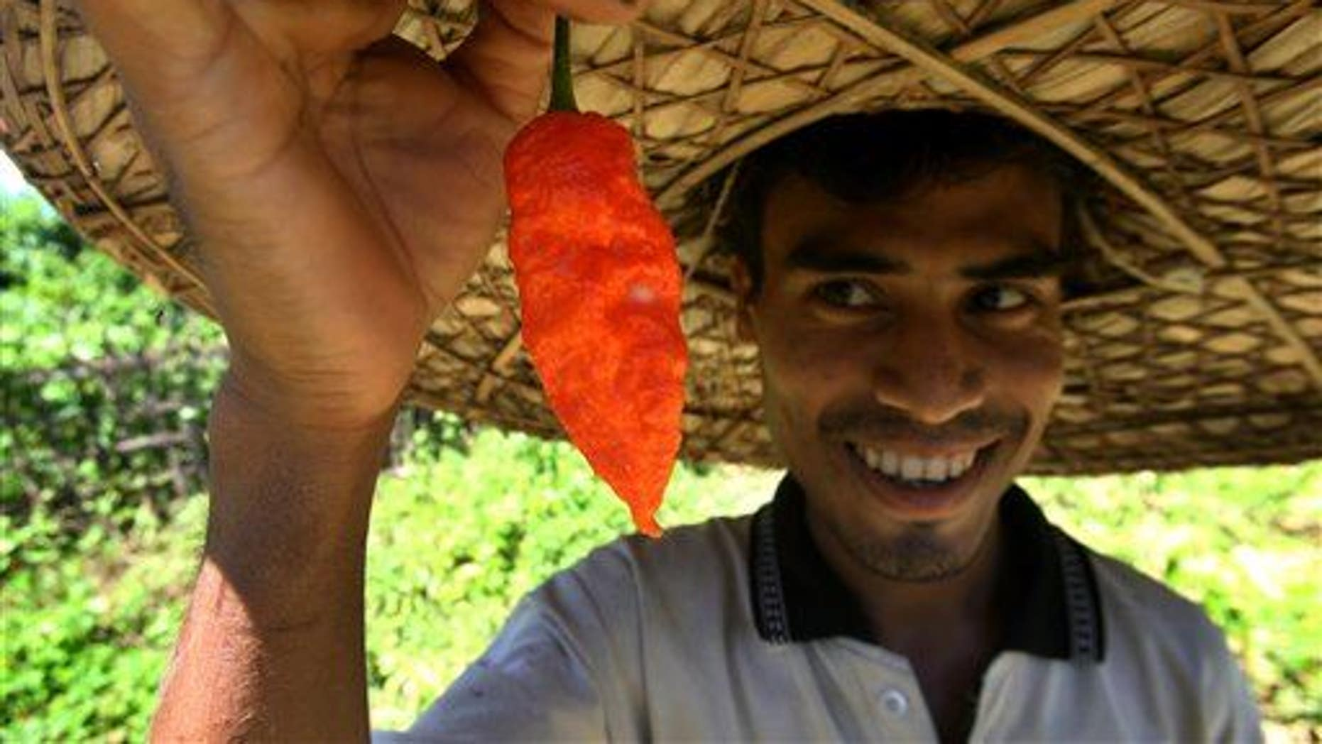 An Indian farmer holding up a Ghost Pepper picked from his fields.