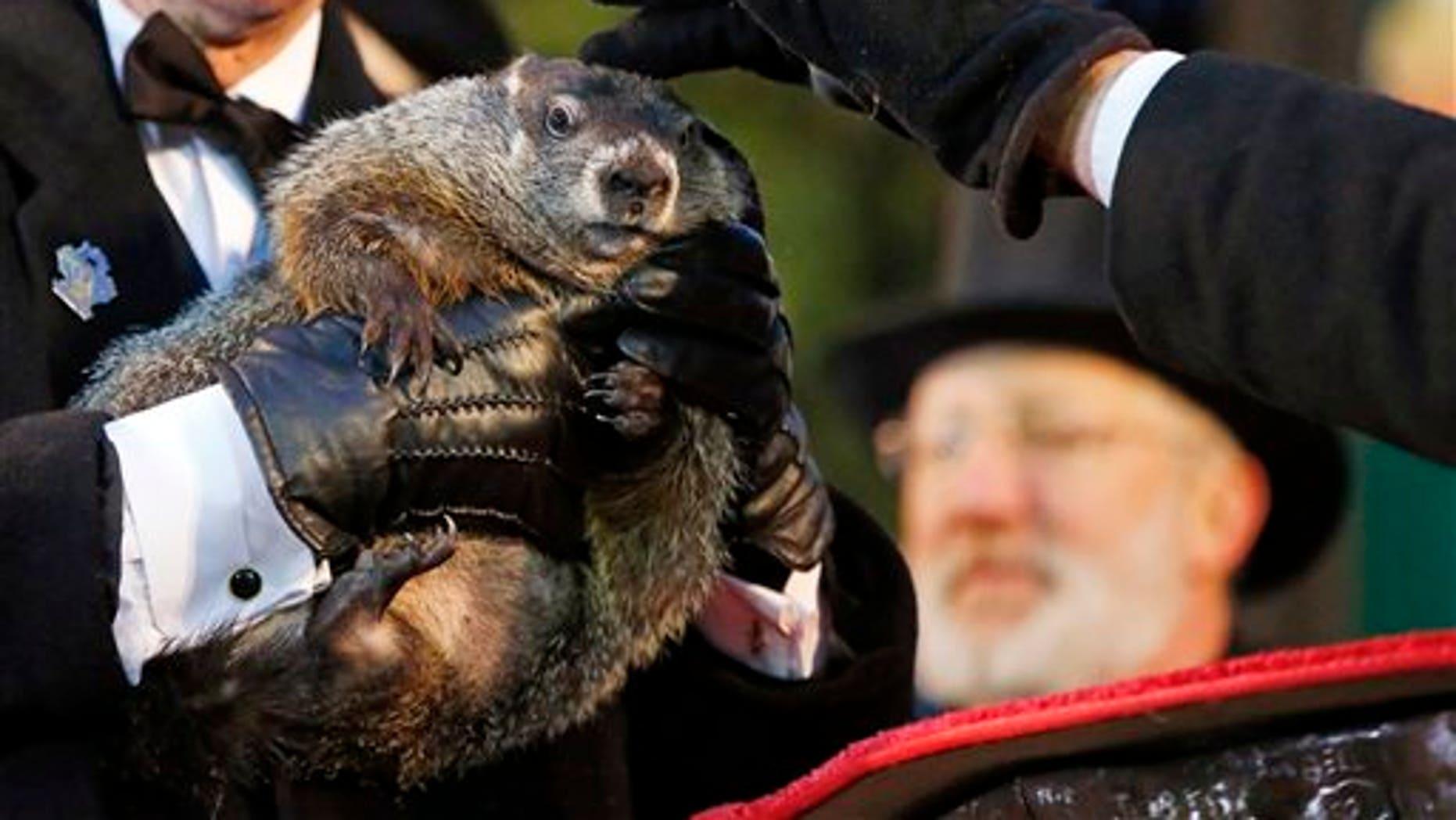 Feb. 2: Groundhog Club handler Ron Ploucha holds Punxsutawney Phil, the weather prognosticating groundhog, as co-handler John Griffiths rubs his head, during the 129th celebration of Groundhog Day on Gobble's Knob in Punxsutawney, Pa.