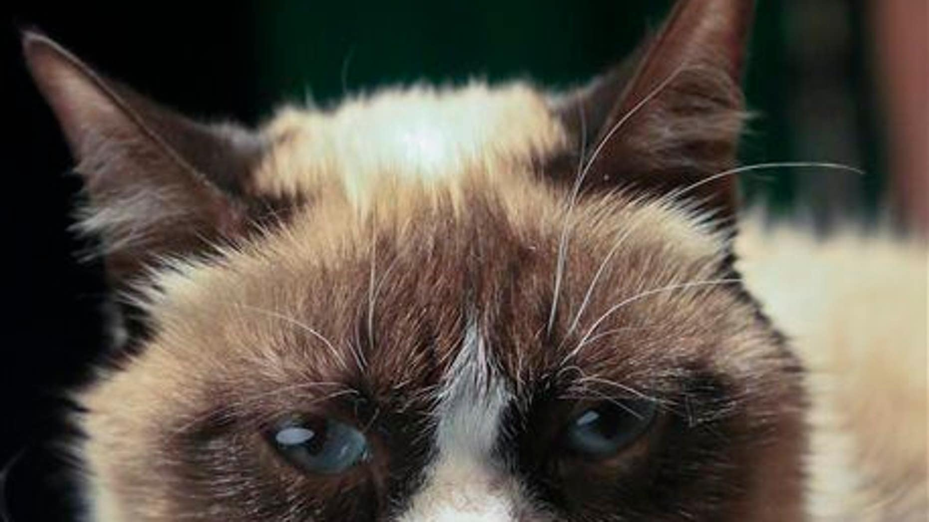 Grumpy Cat, an Internet celebrity cat whose real name is Tardar Sauce, is photographed on Friday, April 4, 2014 in New York.