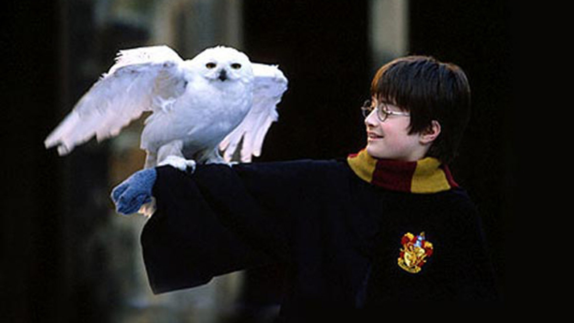 Owls play a prominent role in the Harry Potter film and book series. But rabid fans may be affecting the owl population in the real world.