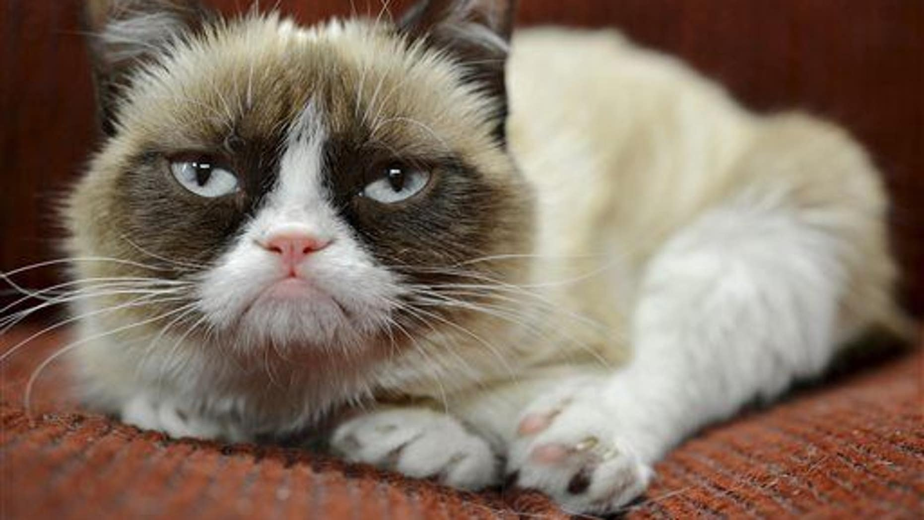 Maybe Grumpy Cat just needs more happy feline friends.