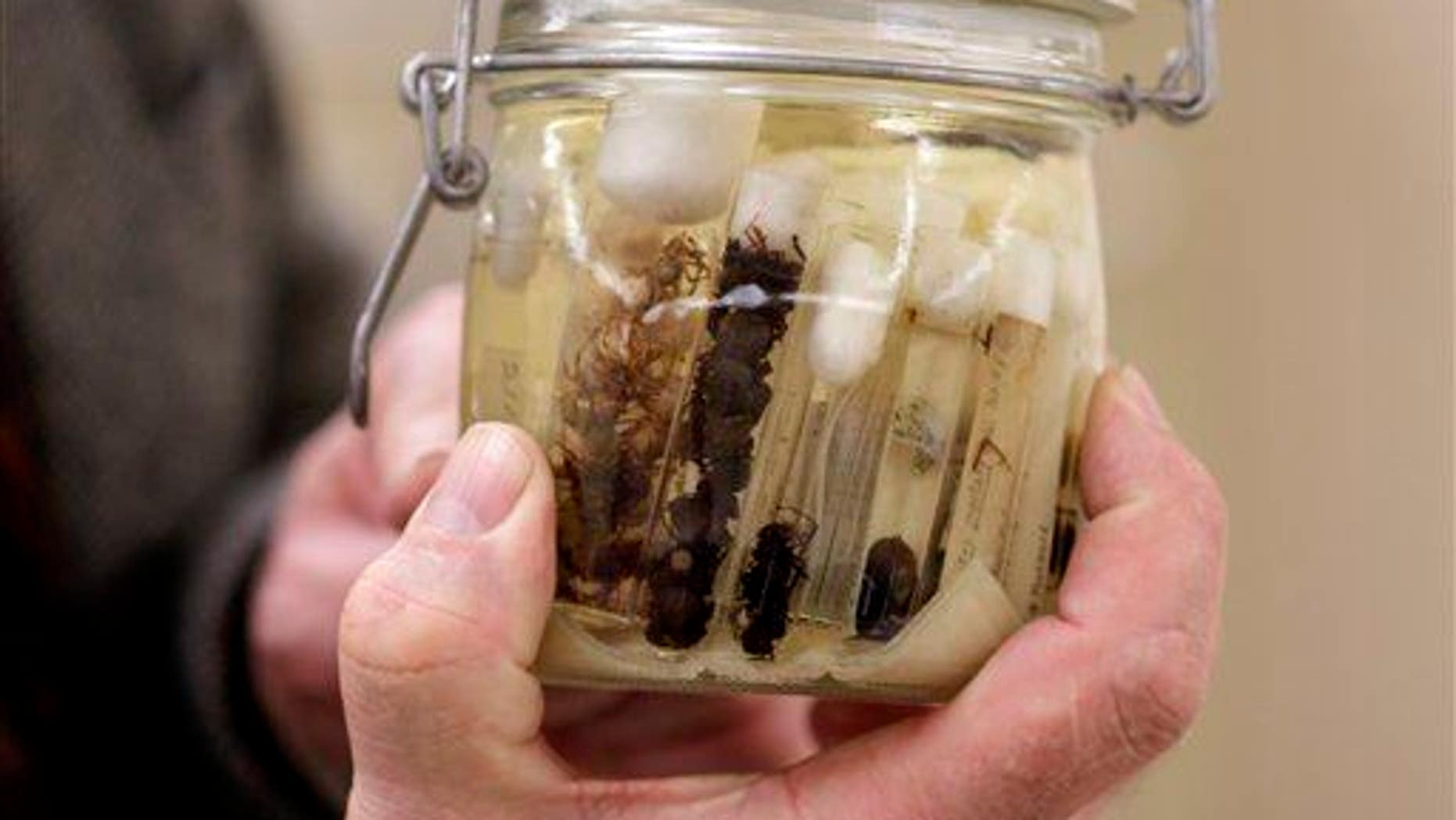 Dr. Jonathan A. Coddington holds a jar of preserved Black Widow Spiders at the Smithsonian Institution National Museum of Natural History in Washington, Wednesday, March 30, 2011.