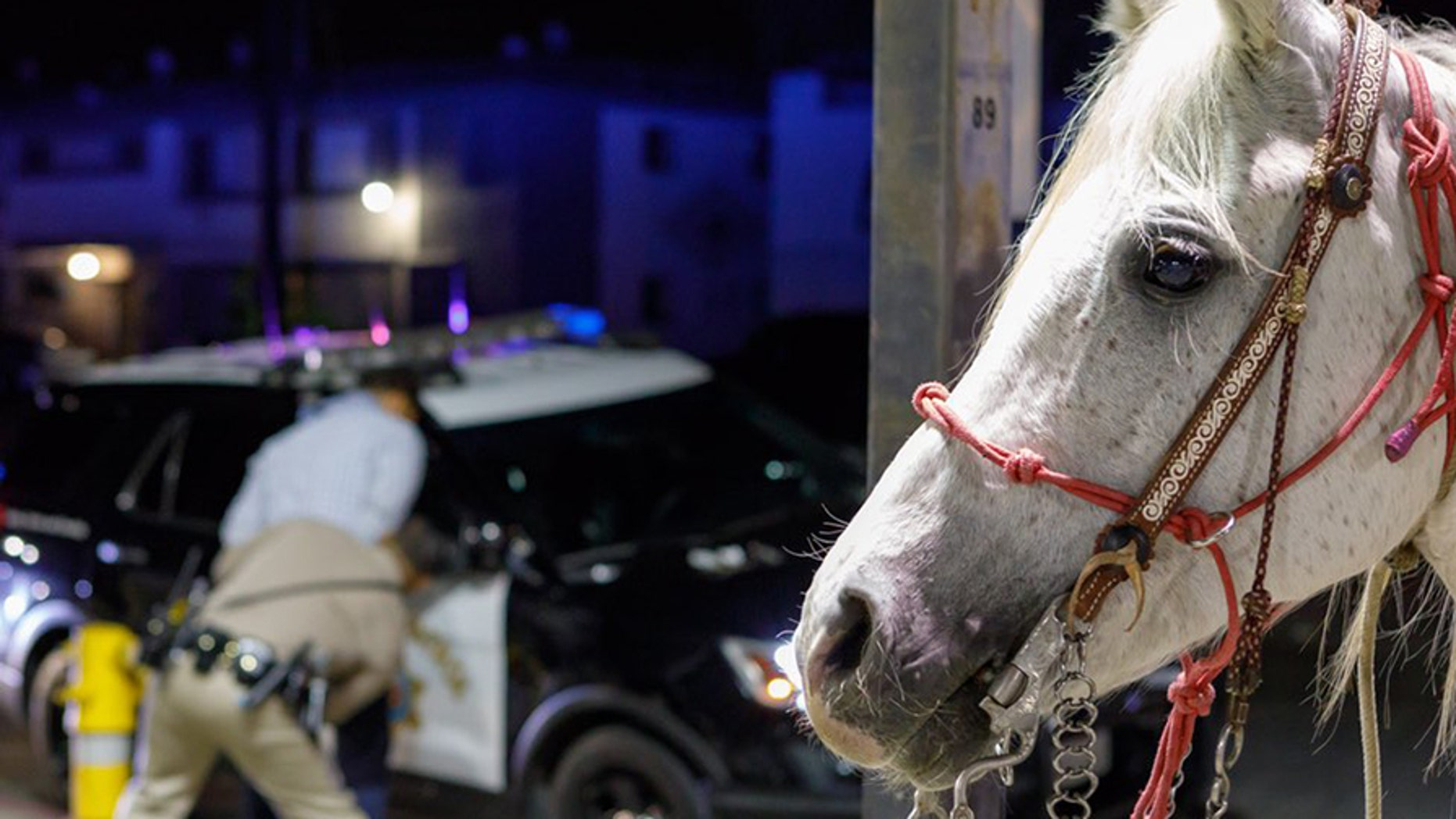 A man was arrested on a DUI charge on Saturday after he was spotted riding a horse along a busy Southern California freeway.