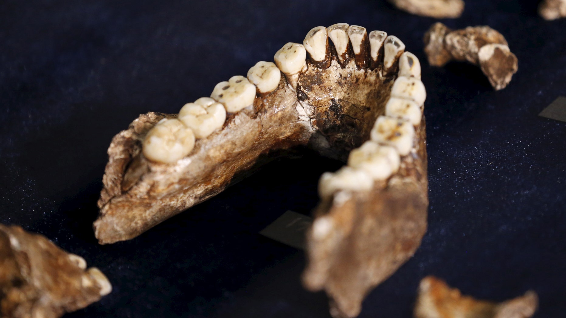 "File photo - Fossils of a newly discovered ancient species, named ""Homo naledi"", are pictured during their unveiling outside Johannesburg Sept. 10, 2015."