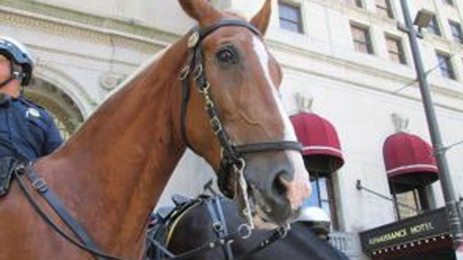 A Cleveland police officer said he witnessed an assault and followed the suspect on horseback.