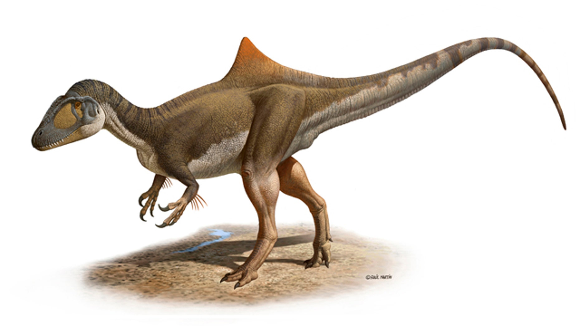 The weird world of dinosaurs has just gotten a tad more bizarre. Scientists found a nearly complete fossil of a new dinosaur that sports a noticeable hump, maybe as advertising.