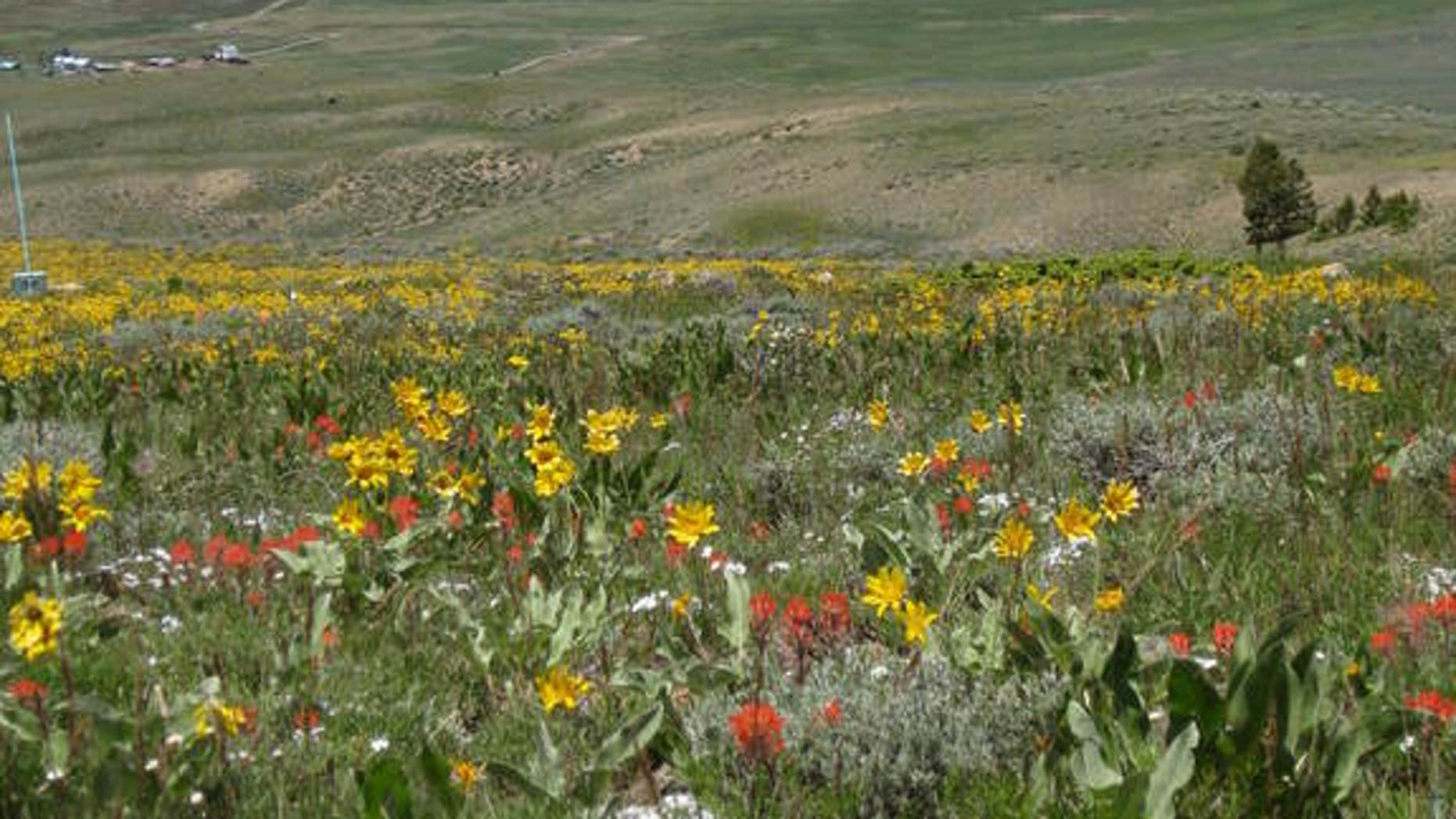 The Rocky Mountain meadow where researchers studied animal, plant and insect interactions.