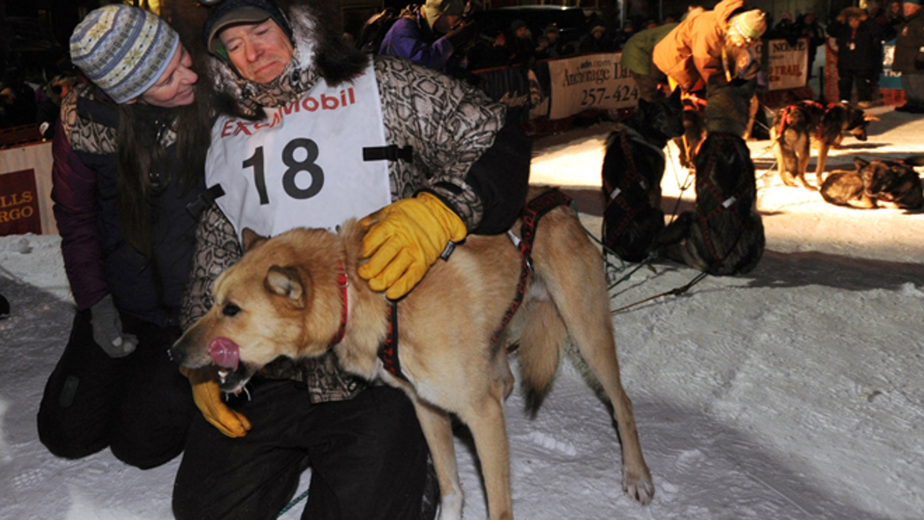 March 13: Four-time Iditarod champion Jeff King pats a dog after he finished third at Nome, Alaska.