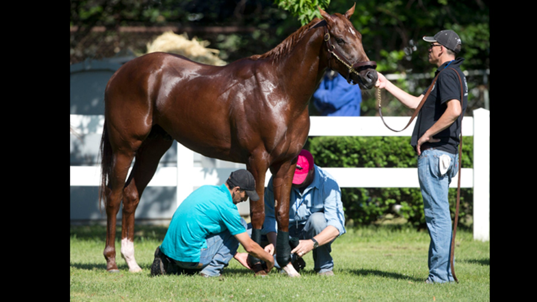 FILE - This June 7, 2012 file photo shows I'll Have Another being tended to after a bath at Belmont Park in Elmont, N.Y.  (AP Photo/Mike Groll, File)