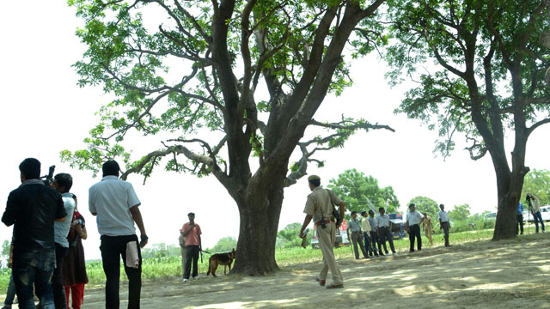 May 31, 2014: A police dog stands near the tree where two teenage girls were found hanging after they were gang raped in Katra village in the northern Indian state of Uttar Pradesh. (AP Photo/Rajeev Pal)
