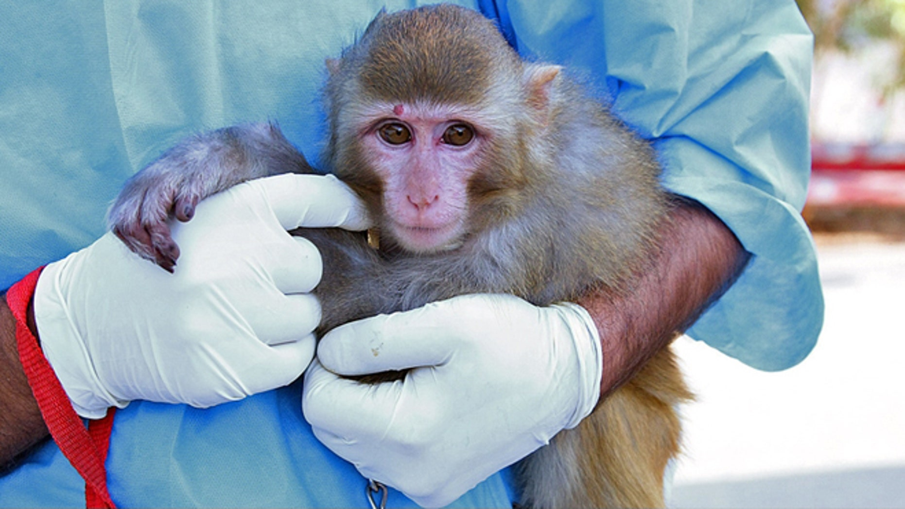 Jan. 28, 2012: Iran said it has successfully sent a monkey into space, describing the launch as another step toward Tehran's goal of a manned space flight.