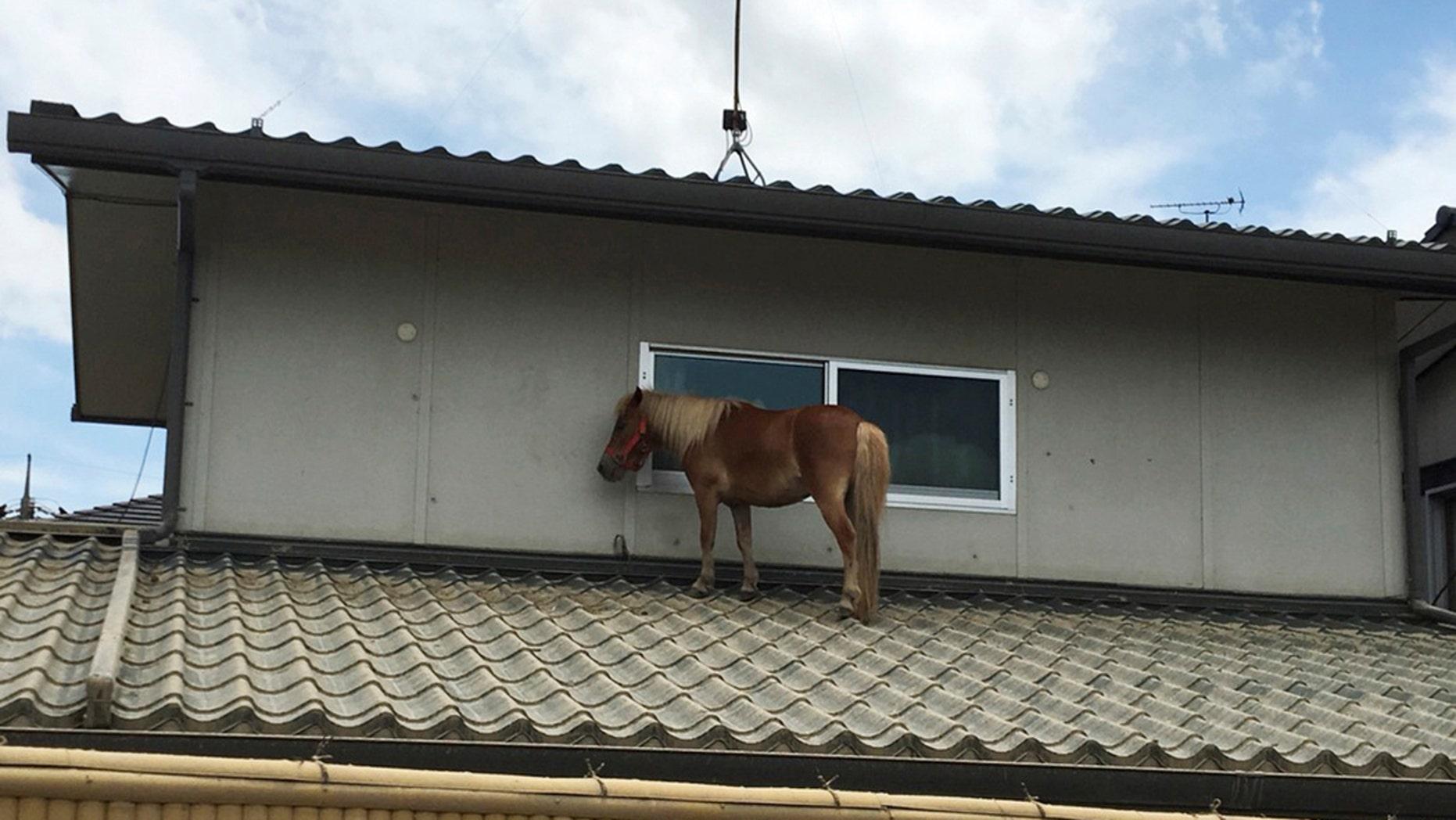 A horse ended up stranded on a rooftop after torrential rain in Kurashiki, Japan.