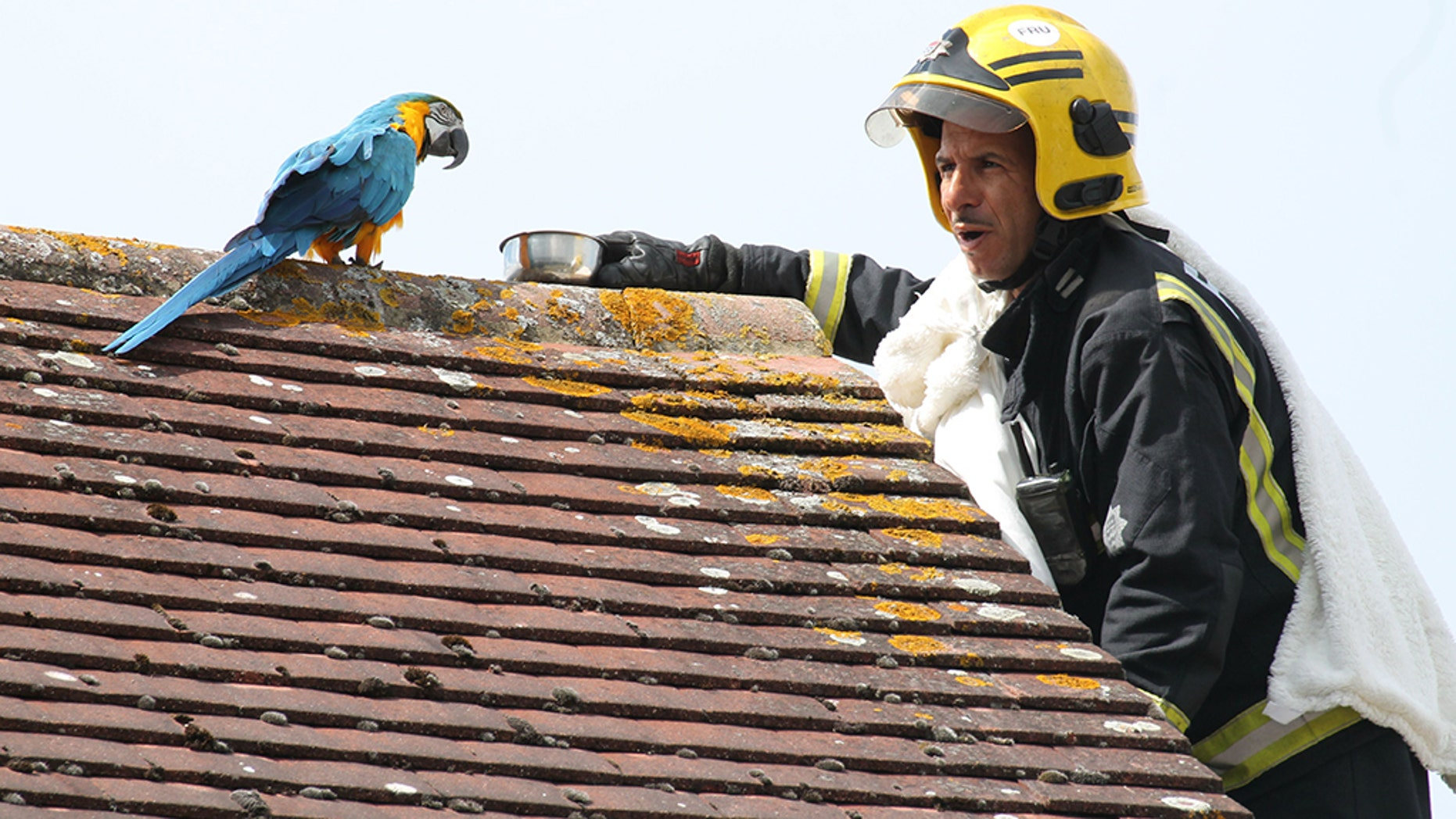 A parrot stuck on a roof for three days greeted firefighters sent to its aid with a four-letter tirade.
